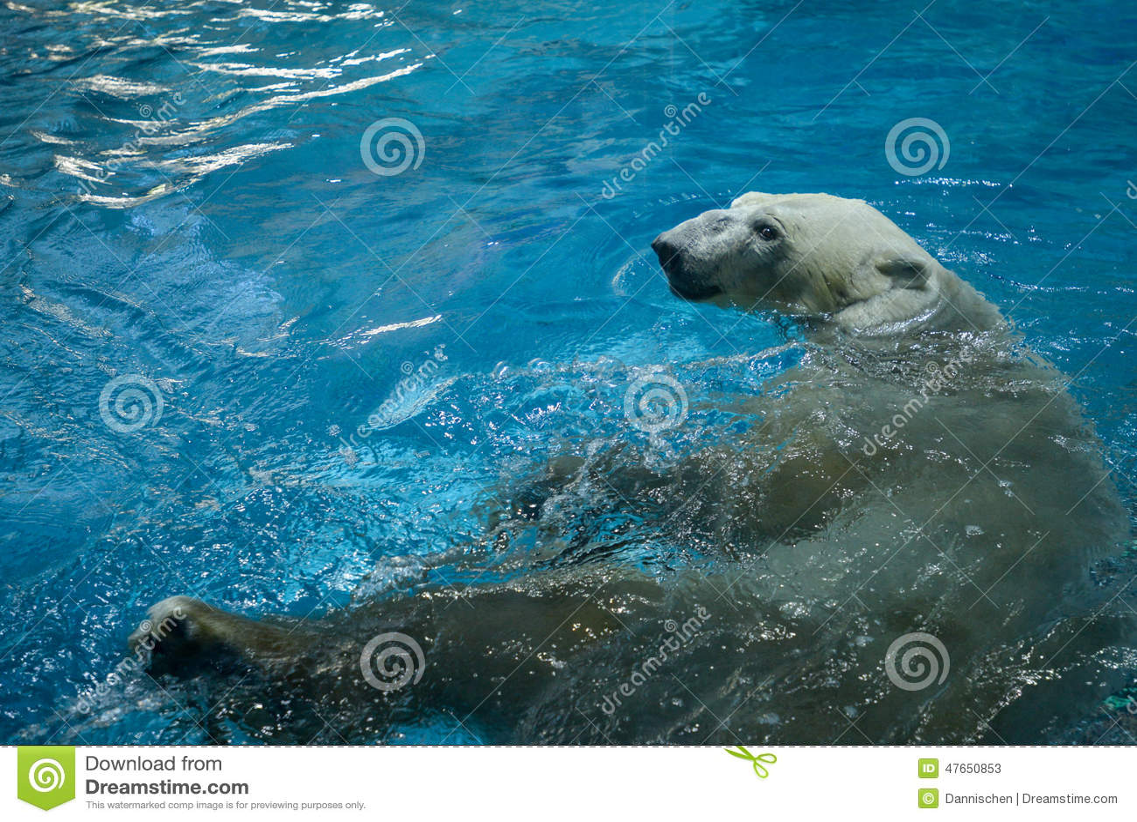 Polar bear swimming in ocean - photo#28