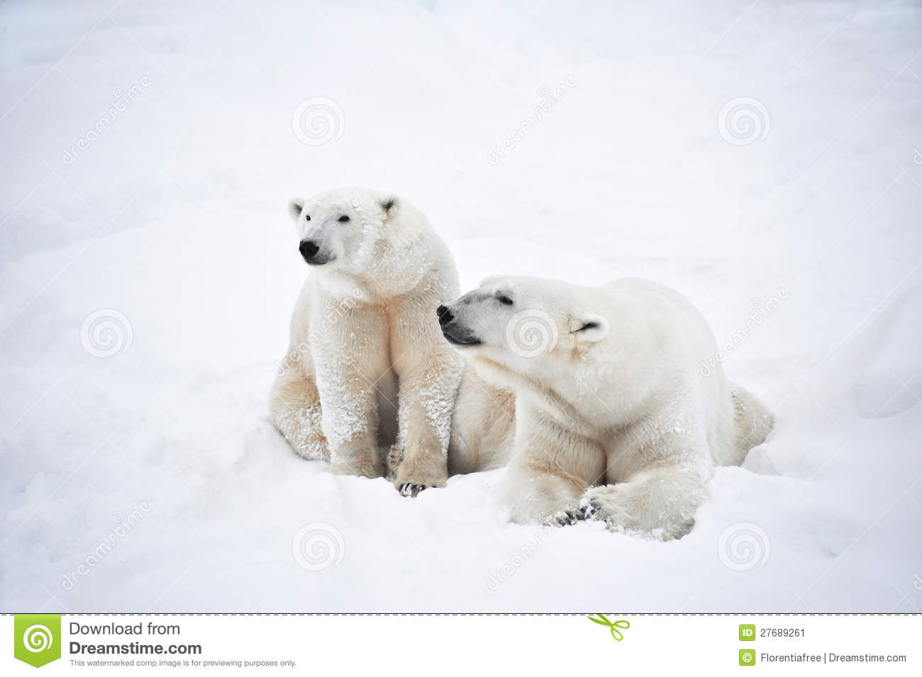 polar bear couple - photo #5