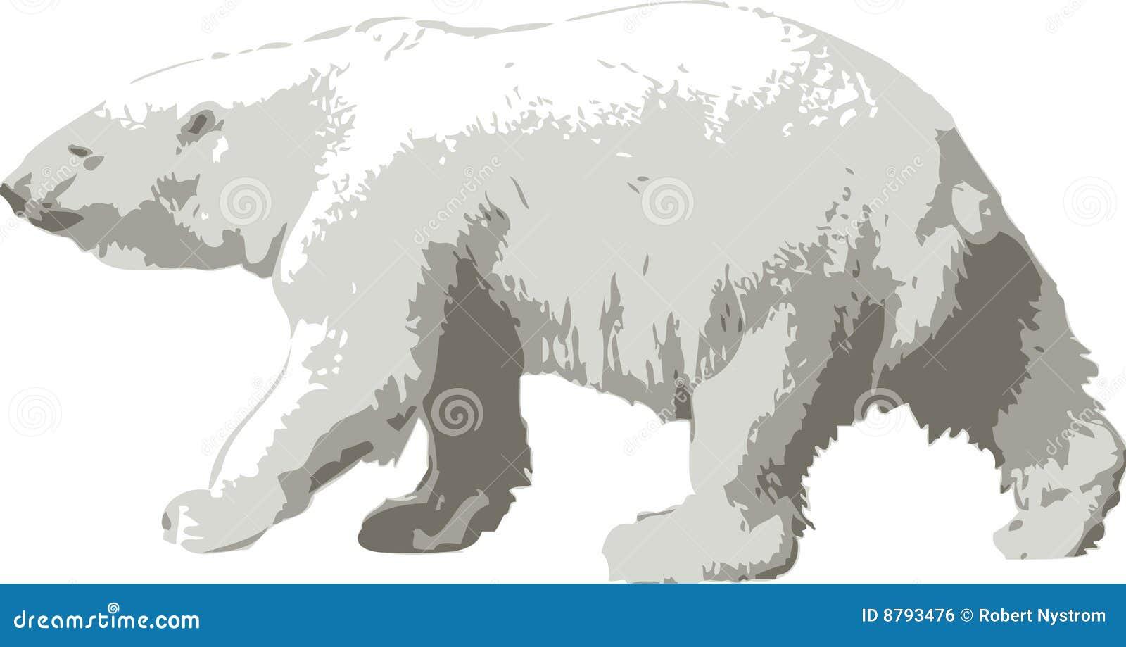 Polar vektor för björnillustration