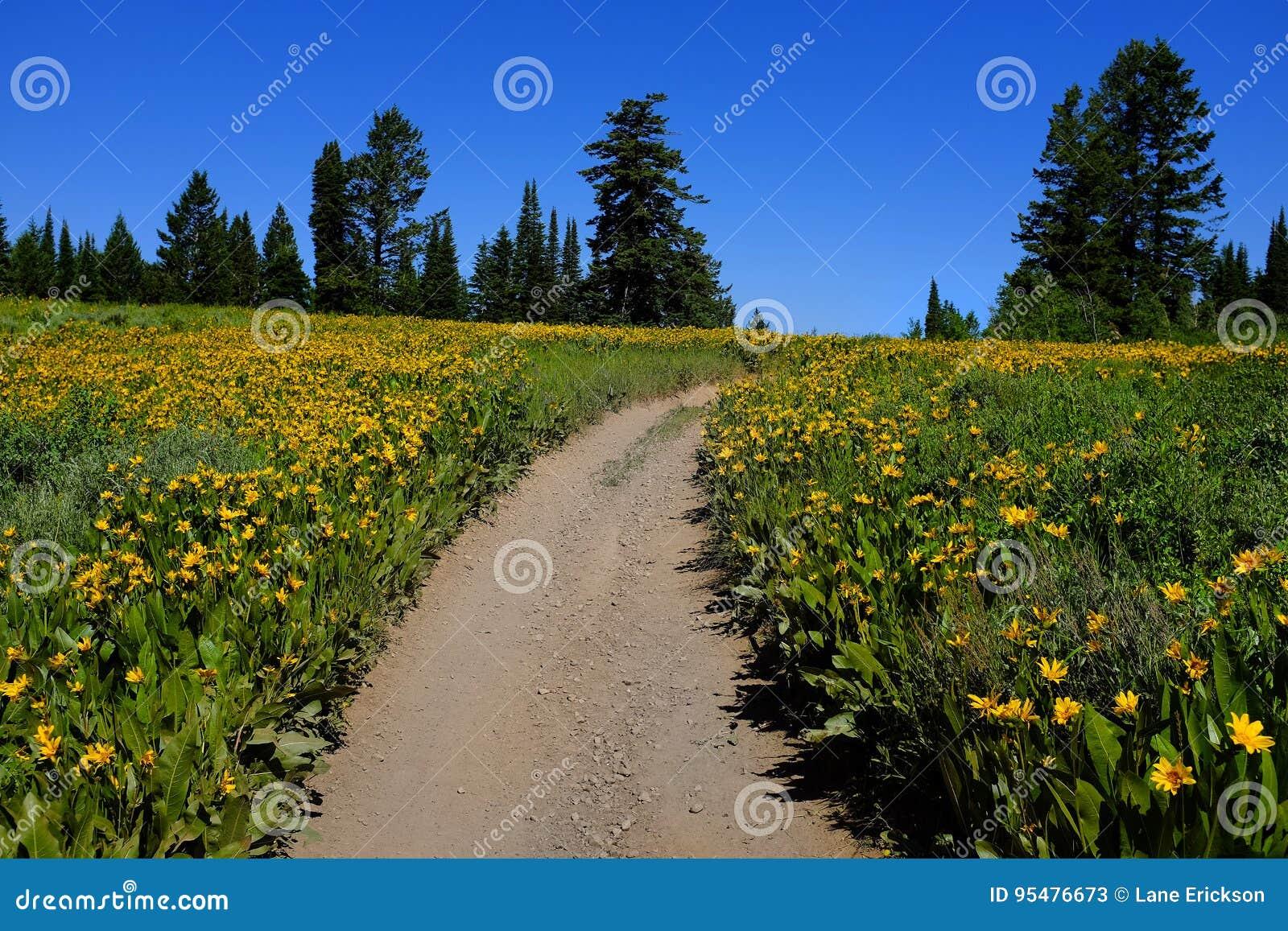Pole Żółci Wildflowers i ślad