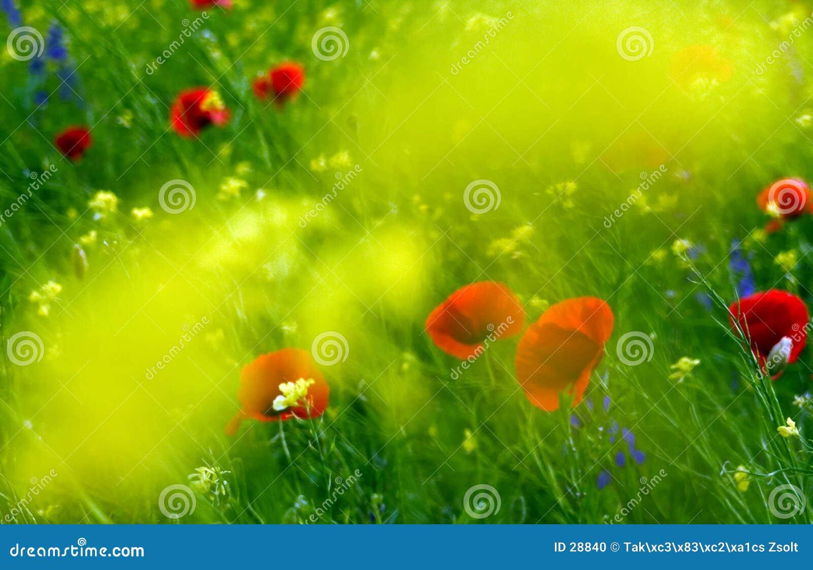 Pole kwiat