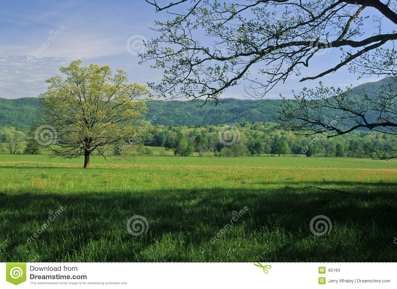 Pole spring drzewa