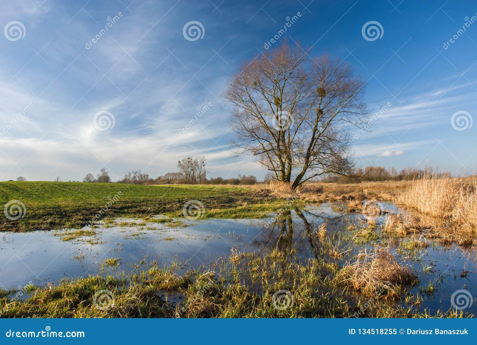 Pole zalewający z wodnym i wielkim drzewem