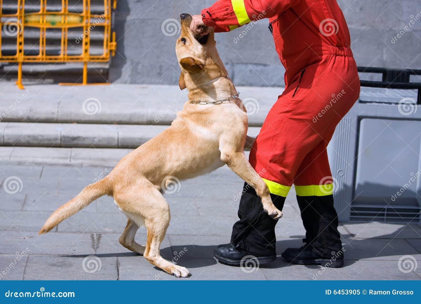 Policja psów