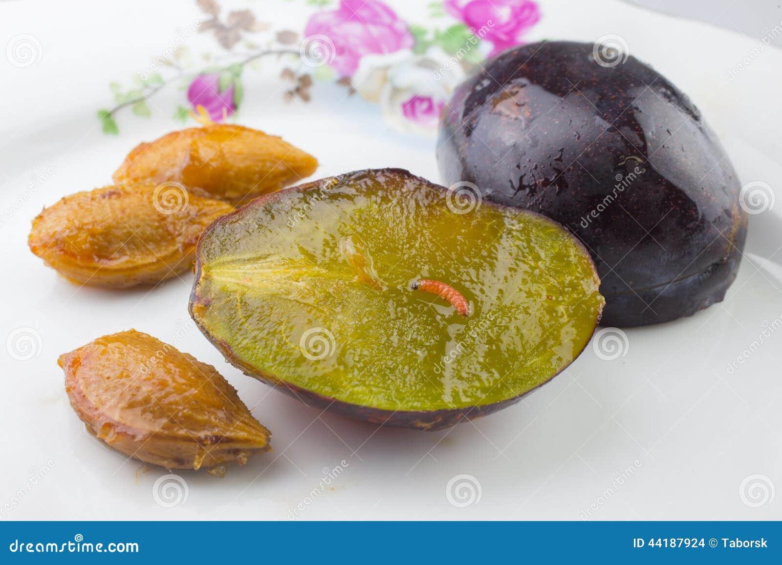 Polilla de la fruta del ciruelo