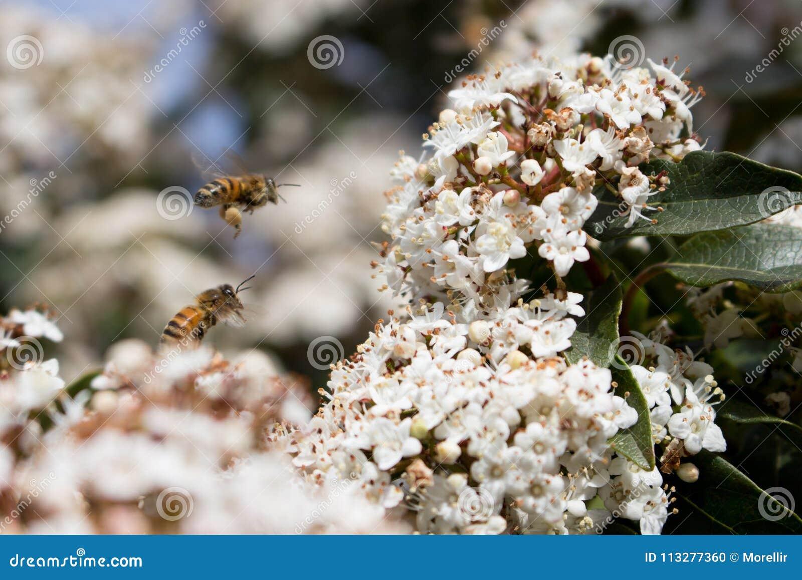 Polinização, abelhas e pólen
