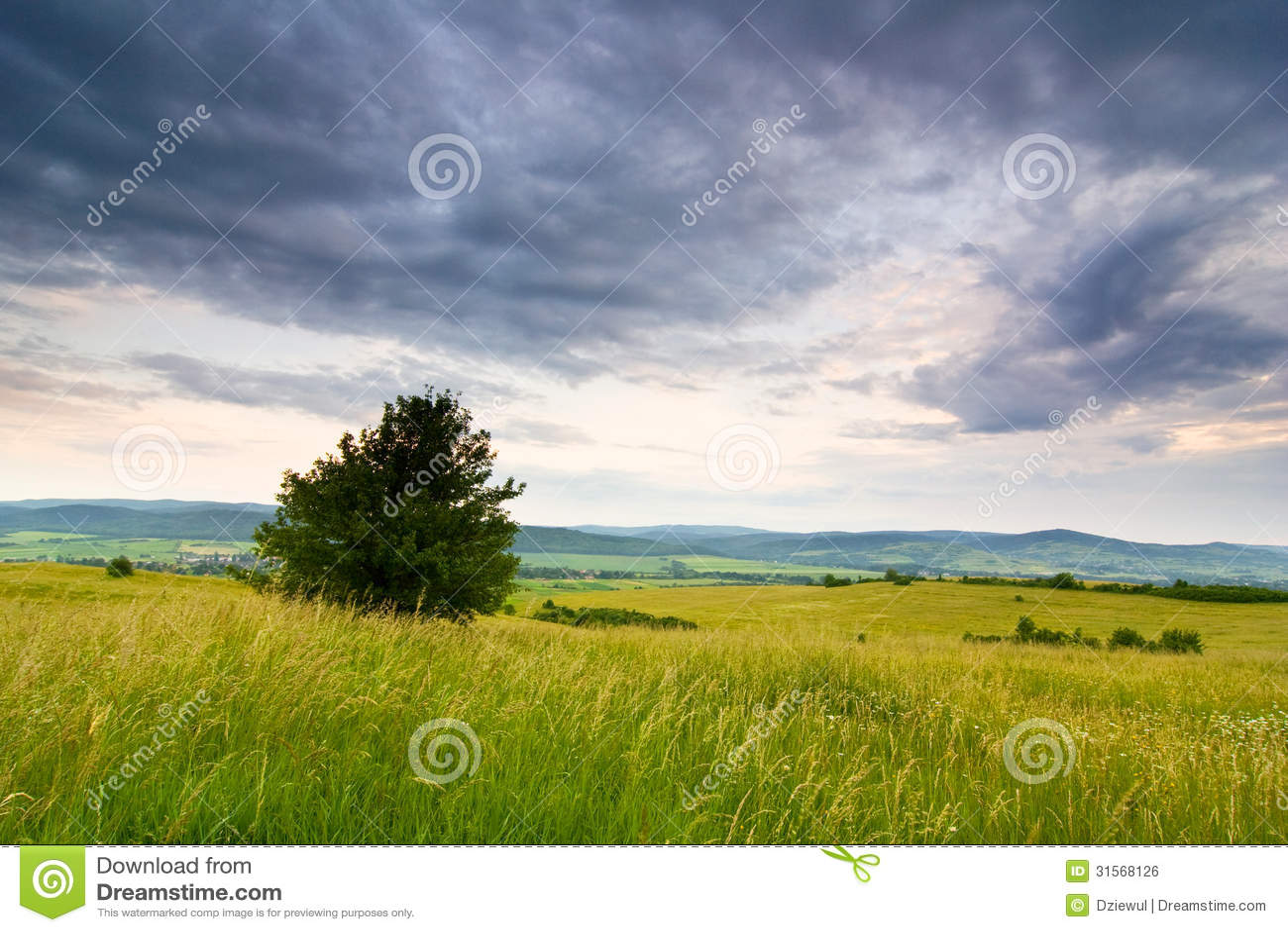 Polish Countryside Landscape Royalty Free Stock Image ...   1300 x 957 jpeg 171kB