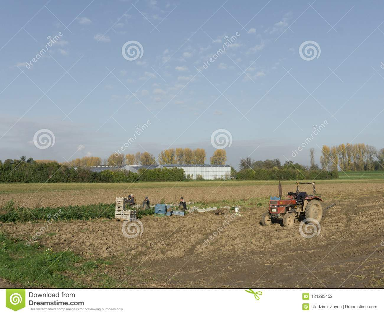 Polish farmers work in the vegetable fields