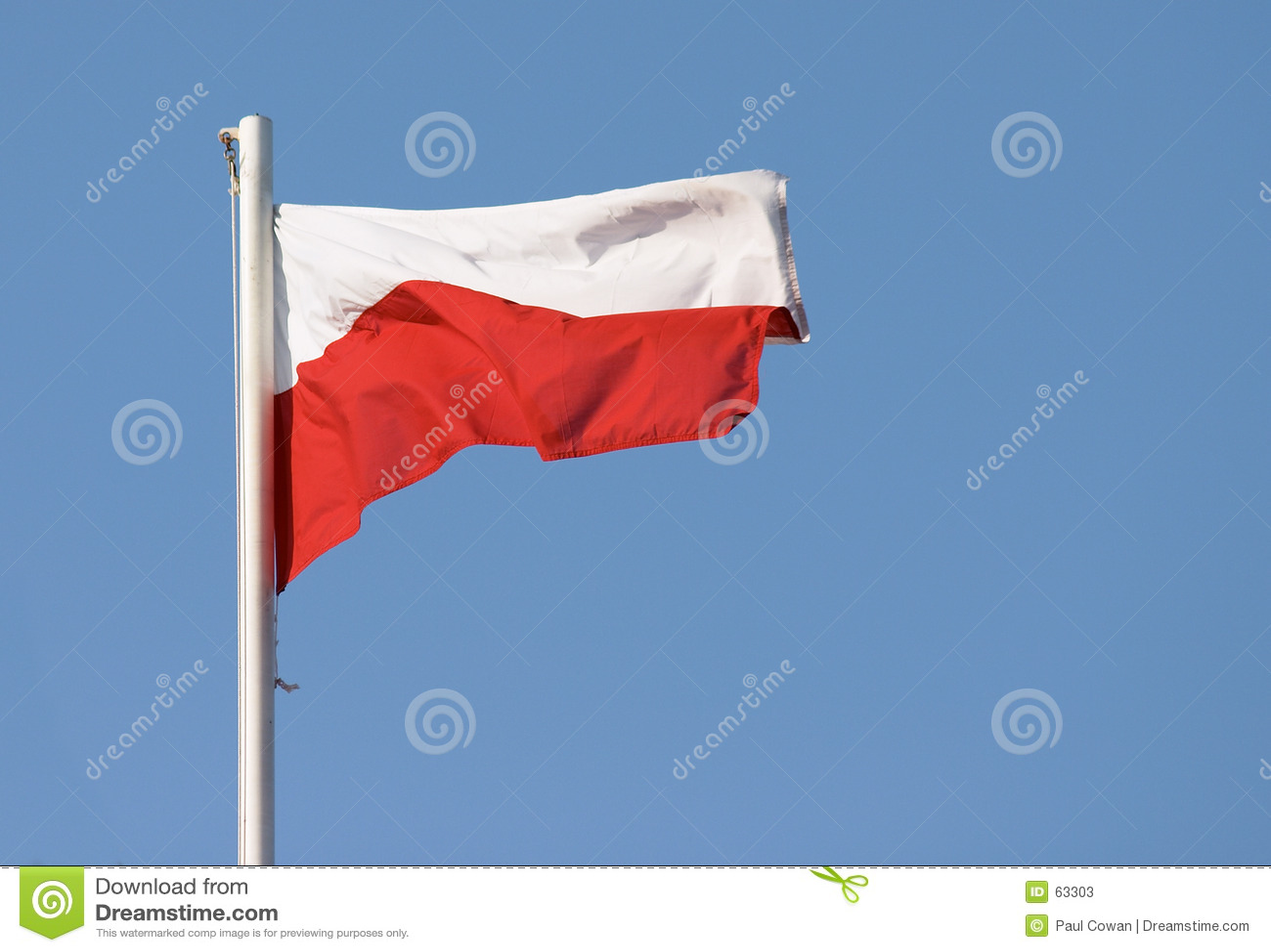 polish flag stock photos image 63303