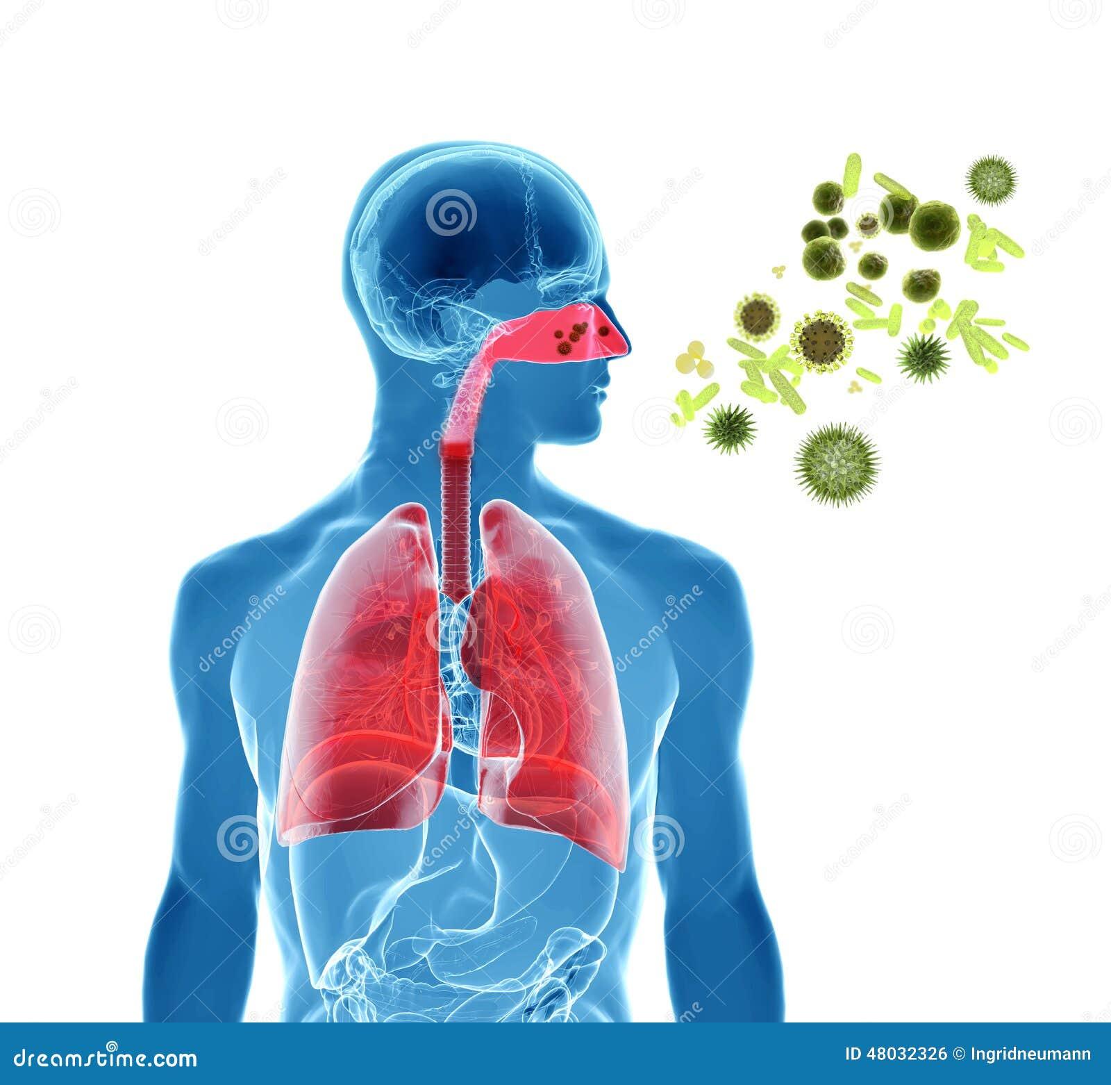 Pollen Allergy    Hay Fever   Influenza Infection Stock