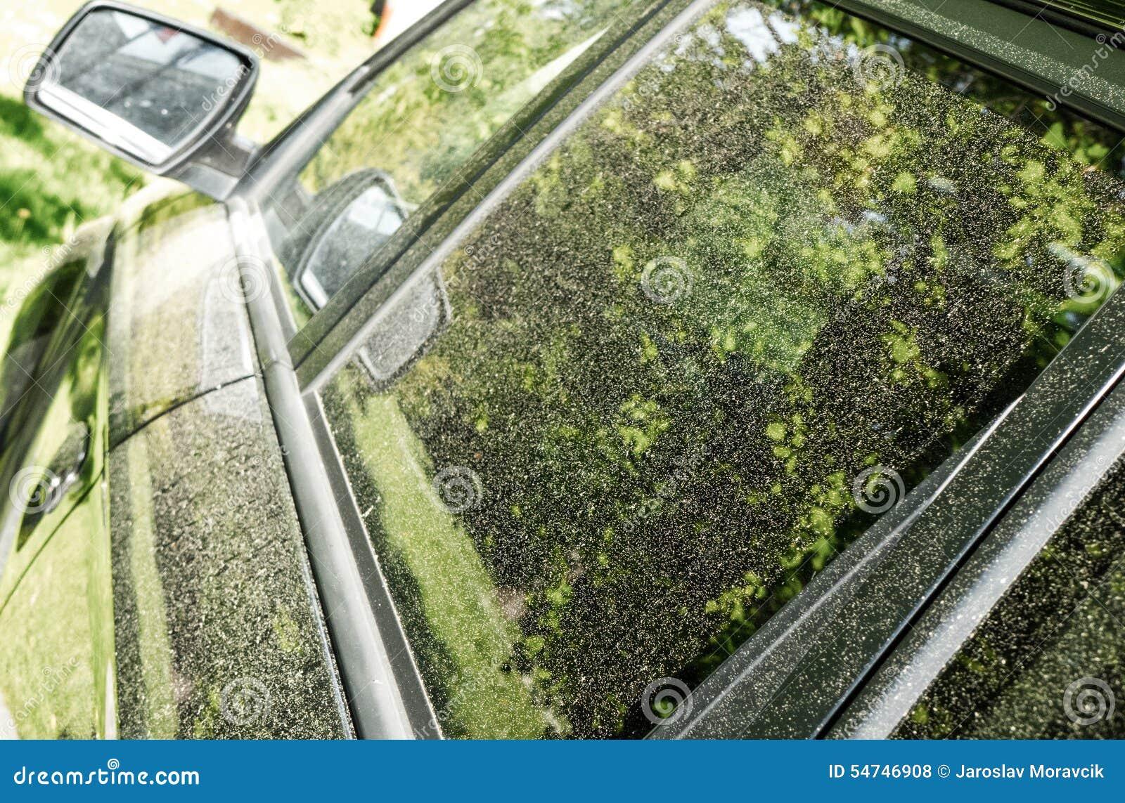 Polline sull automobile
