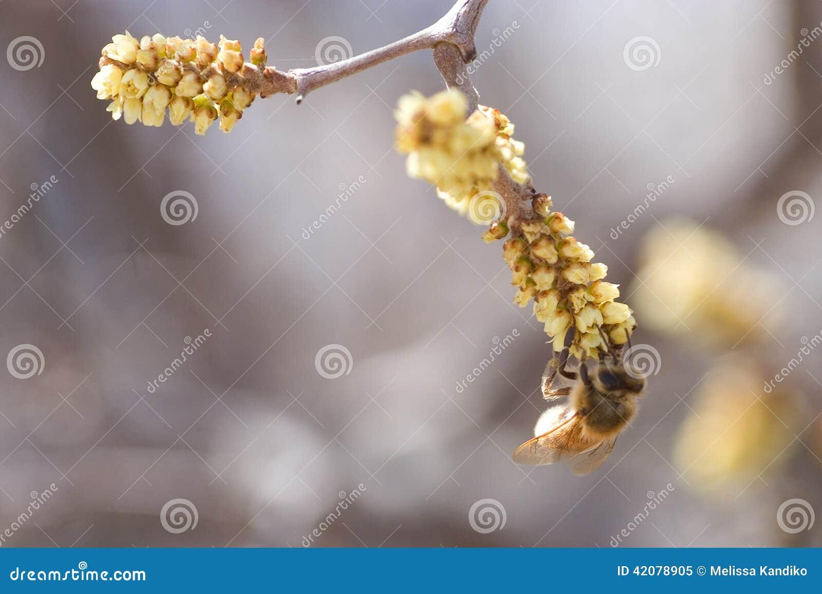 Pollinisateur d écoulement
