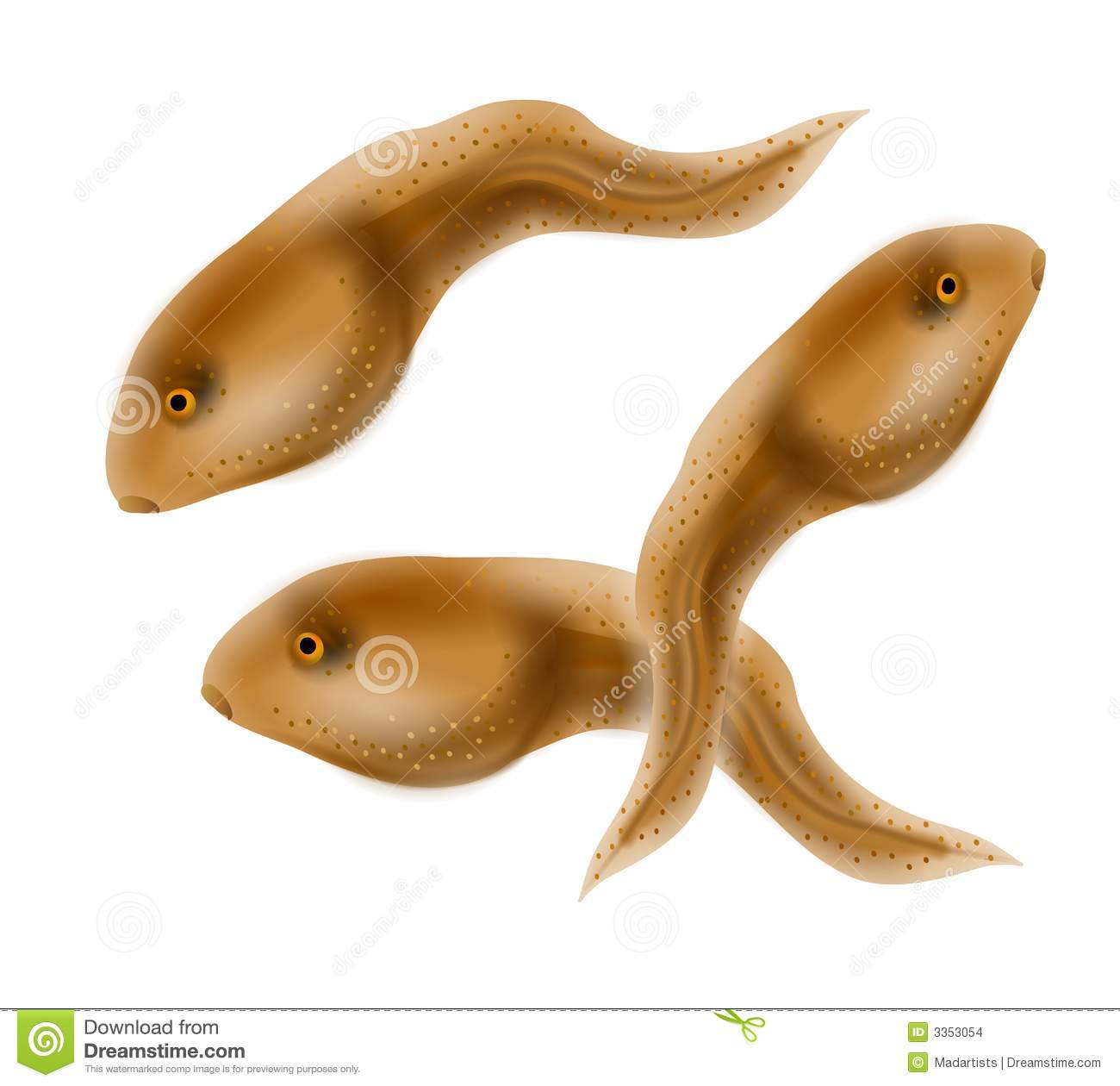 clip art illustration of a group of polliwog tadpoles (immature ...