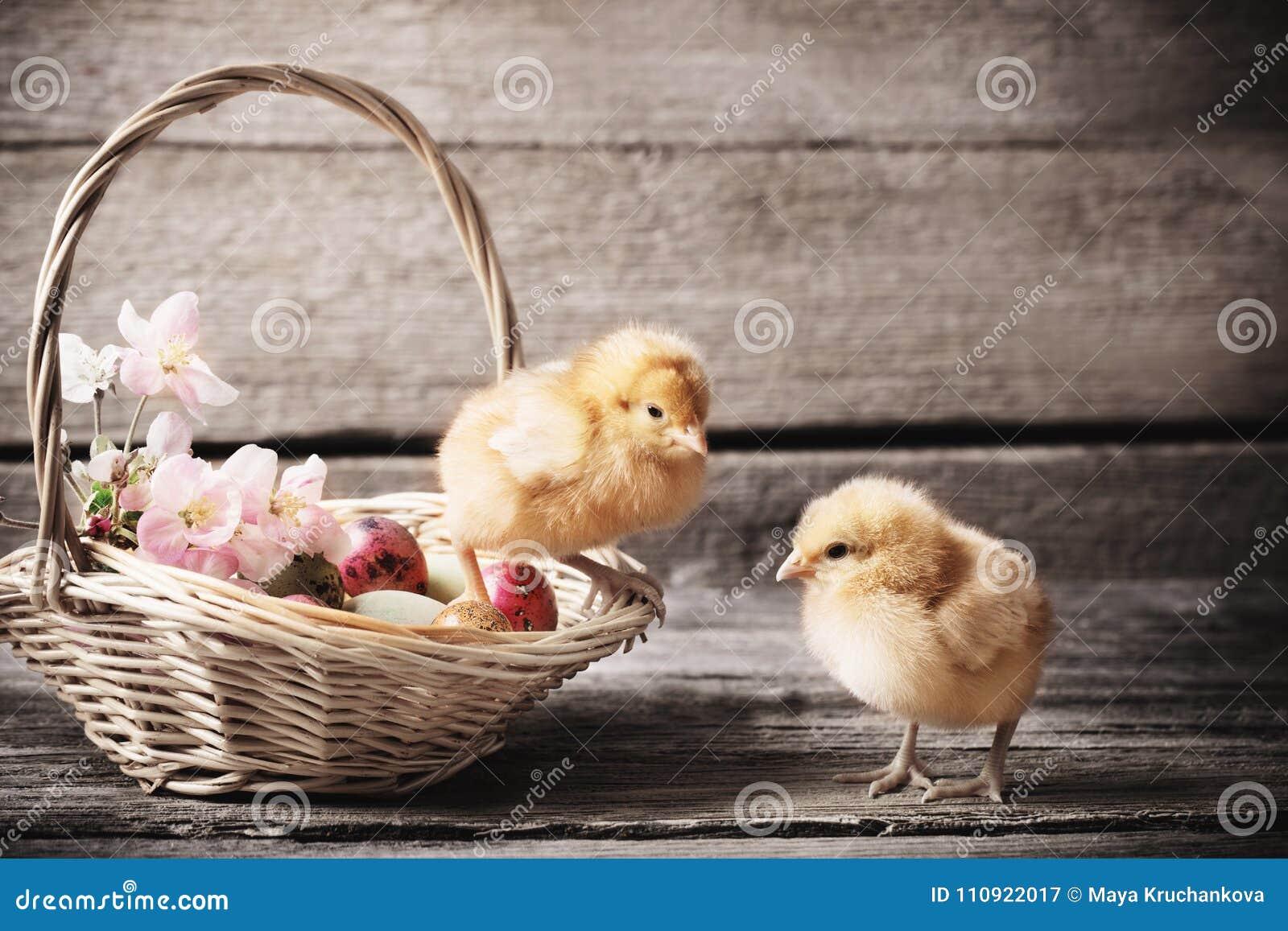 Pollo con los huevos de Pascua en fondo de madera