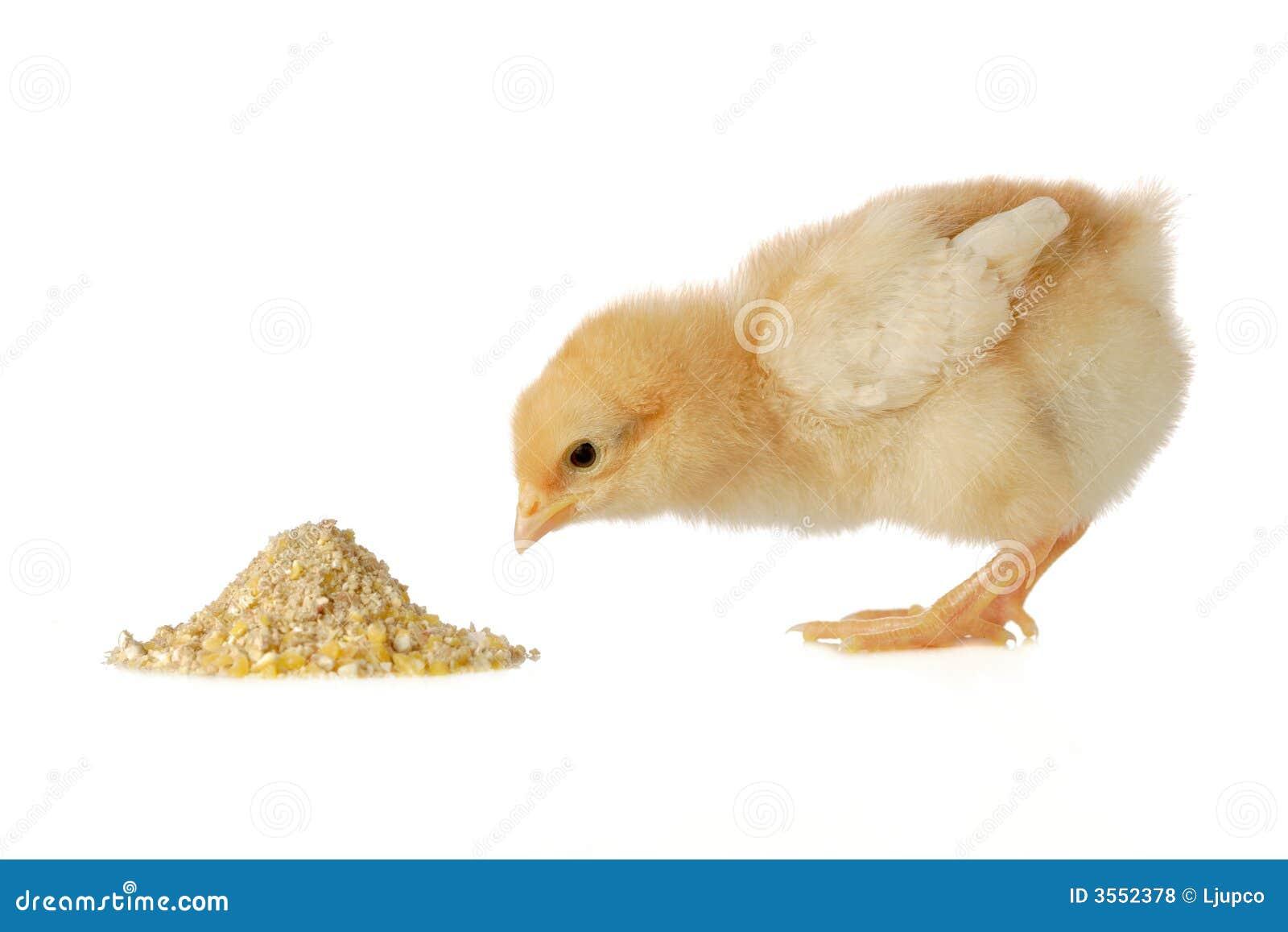 Pollo del bambino che ha un pasto