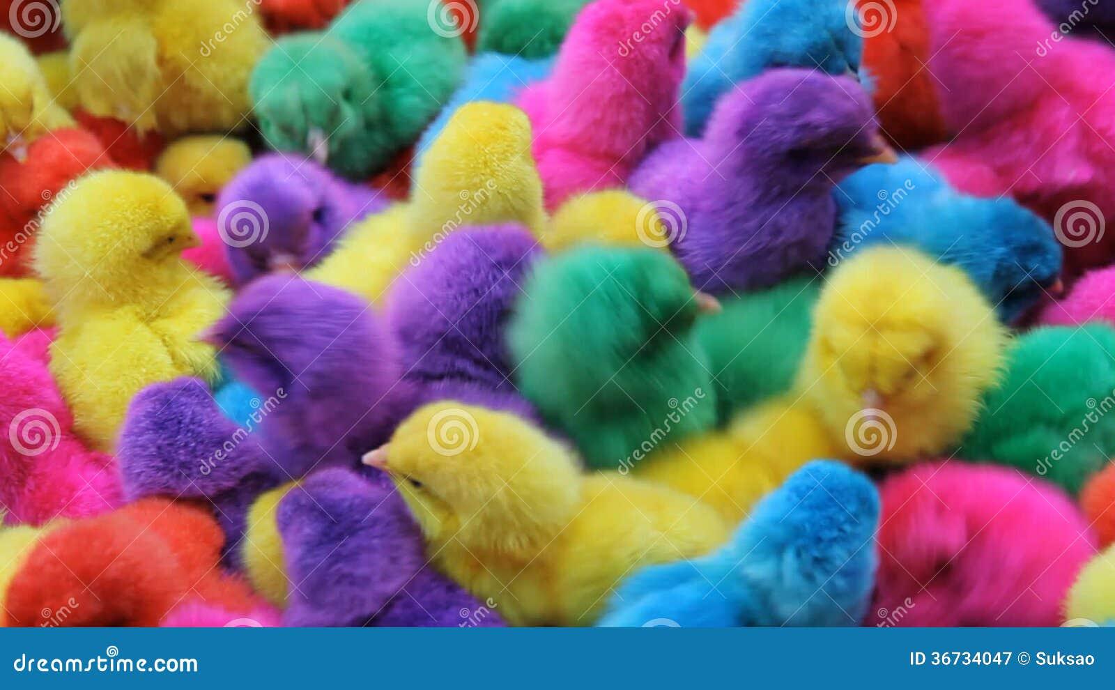 Asombroso Página De Color De Pollo Foto - Dibujos Para Colorear En ...