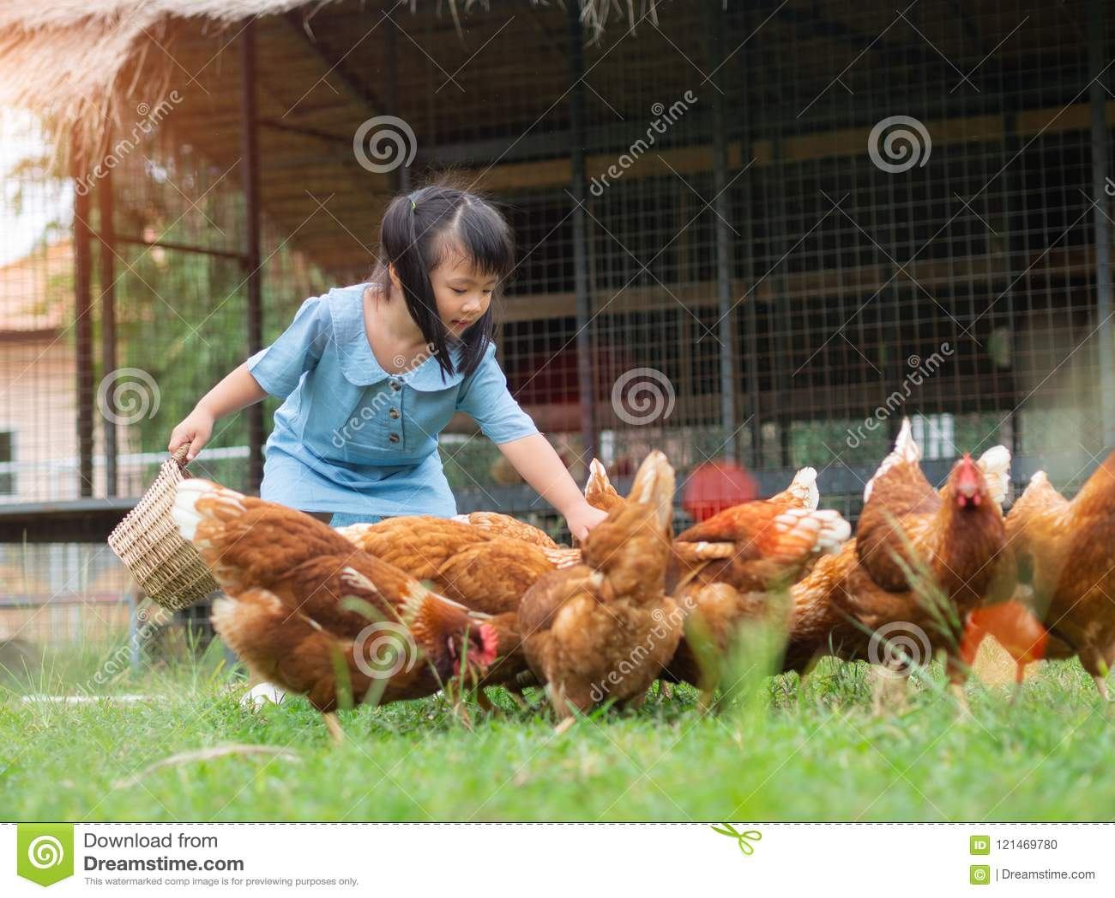 Pollos de alimentación de la niña feliz en la granja Cultivo, animal doméstico, ha