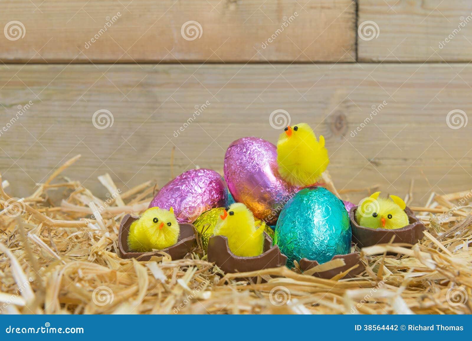 Polluelos de Pascua que traman de los huevos de chocolate
