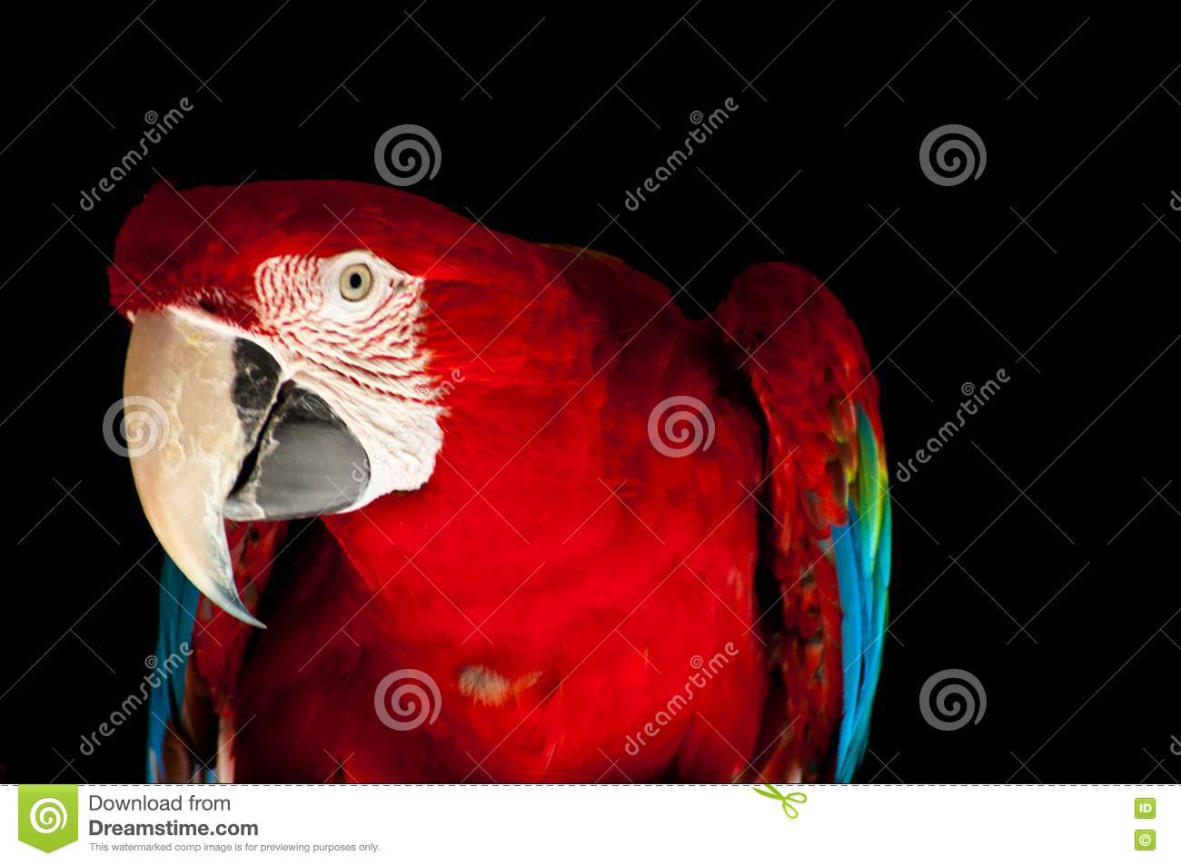 Polly Wants A Cracker Royalty Free Stock Image - Image ...