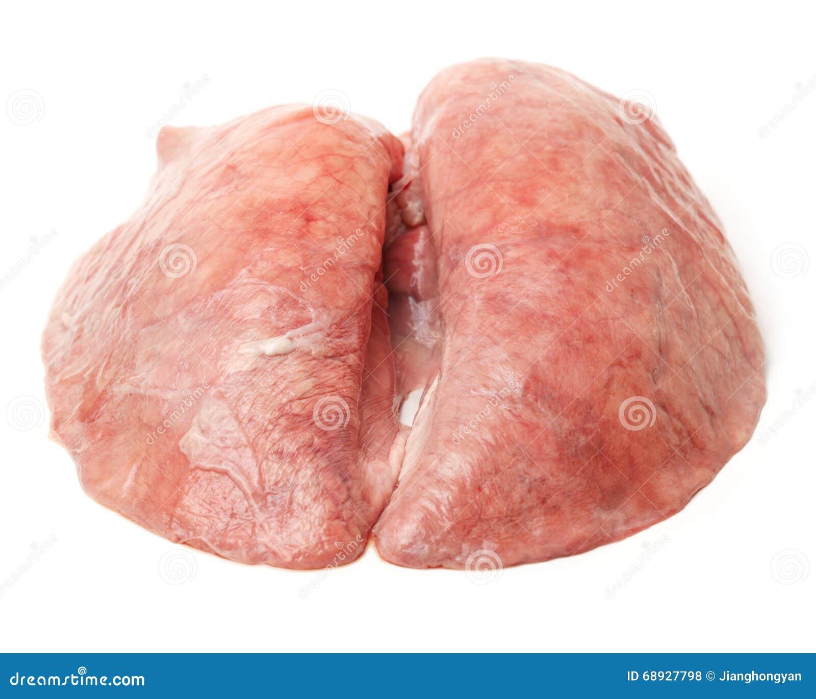 Polmone del maiale isolato