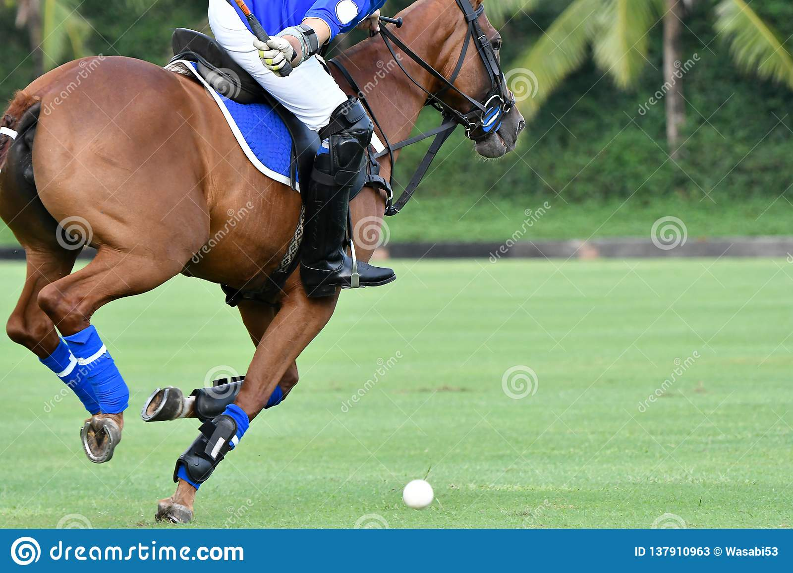 Polo Player Playing Polo Horse During The Games Stock Image Image Of Competition Race 137910963