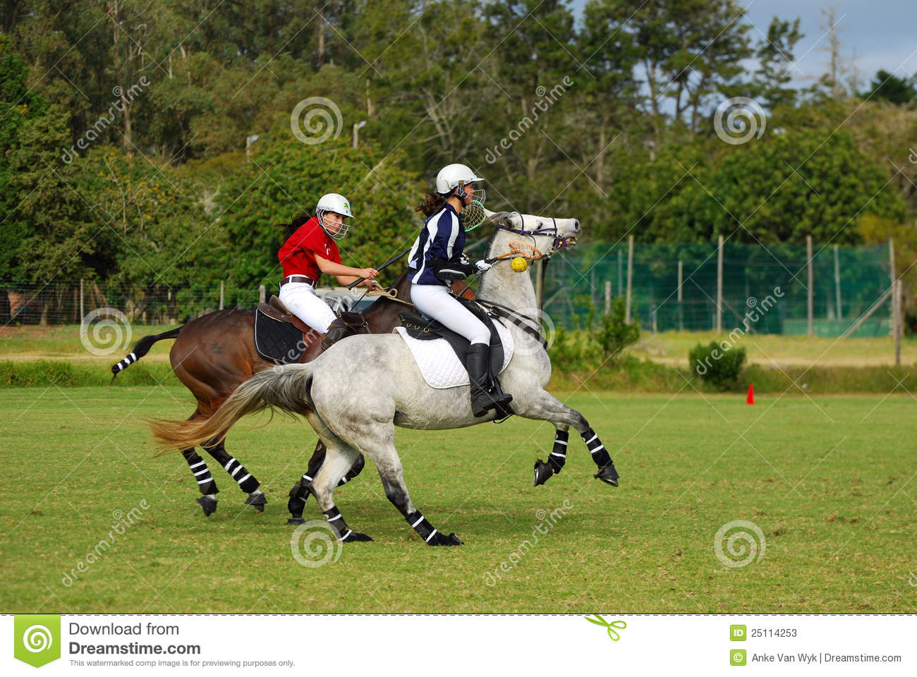 how to train a horse for polocrosse
