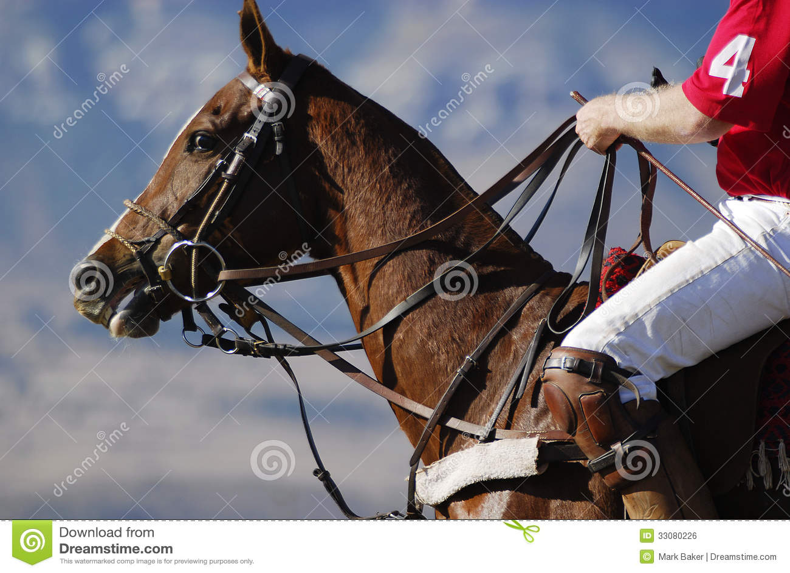 Polohäst