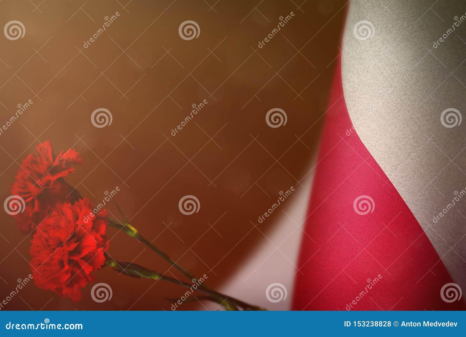 Polska flaga dla zaszczyta weterani lub dzień pamięci z dwa czerwień goździka kwiatów mockup Chwała Polska bohaterzy wojenny poję