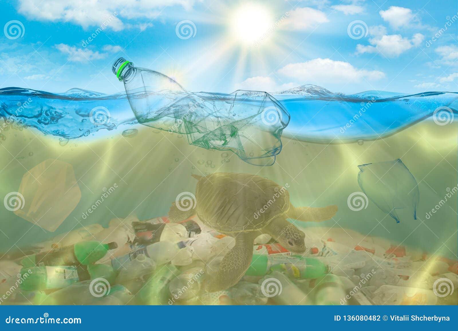 Poluição plástica no problema ambiental do oceano As tartarugas podem comer os sacos de plástico que confundem os por medusa conc
