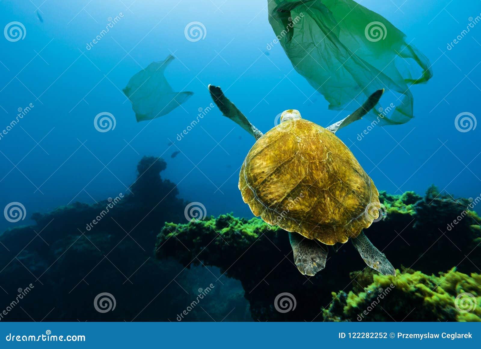 Poluição subaquática Tartaruga subaquática que flutua entre sacos de plástico