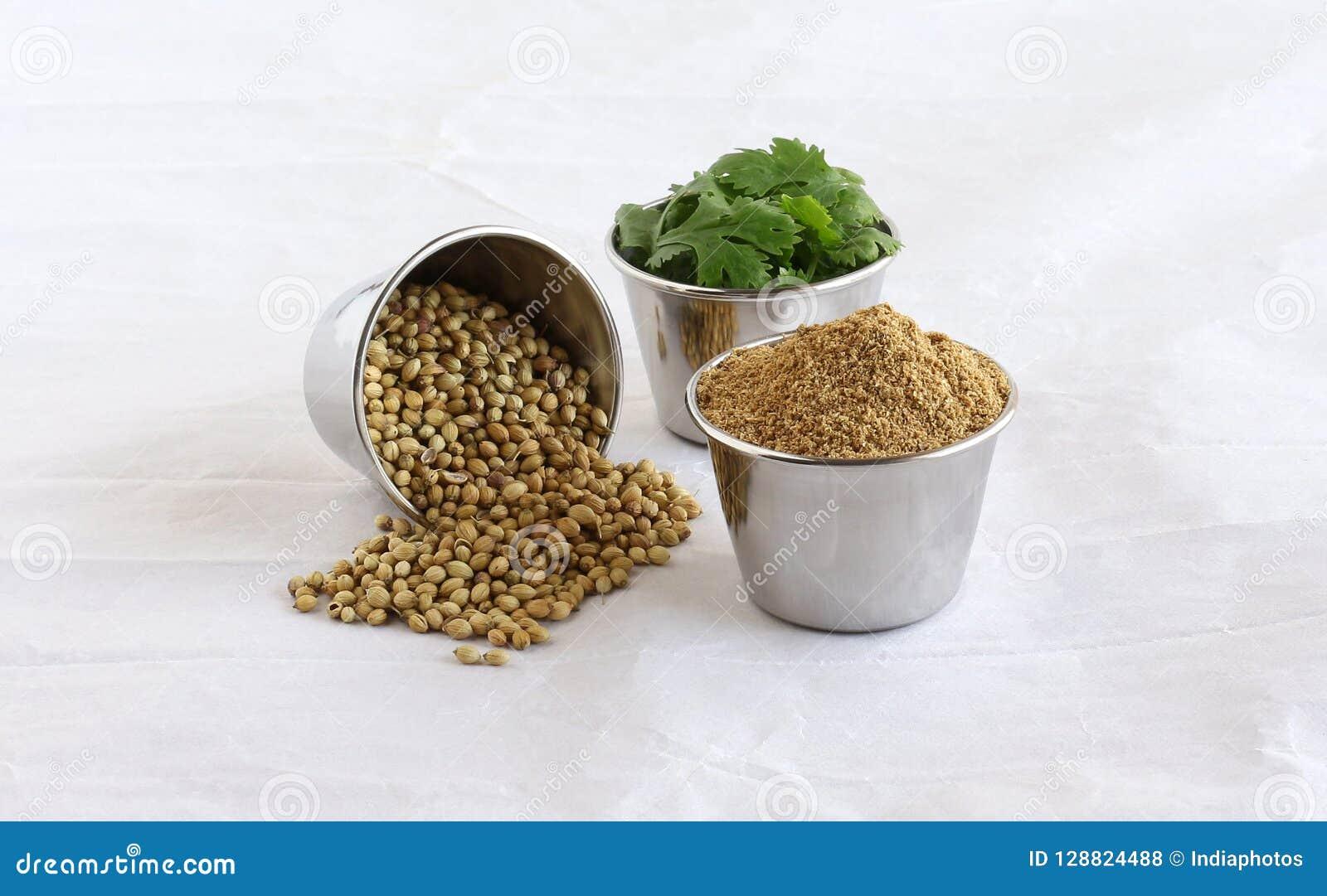 Polvo del coriandro con las semillas y las hojas de coriandro en los cuencos de acero