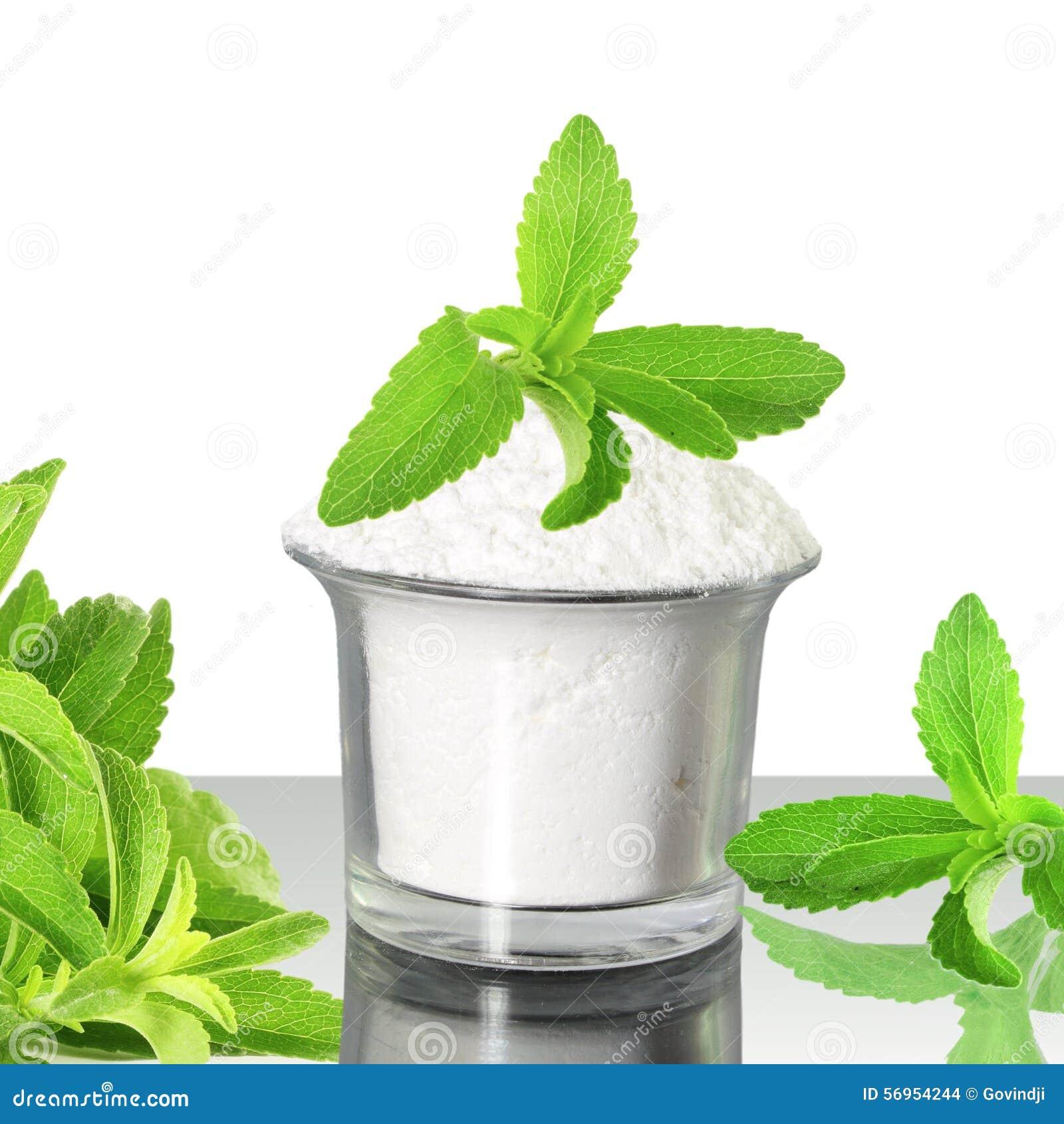 Polvo Verde Fresco Del Stevia Y Del Extracto En El Fondo