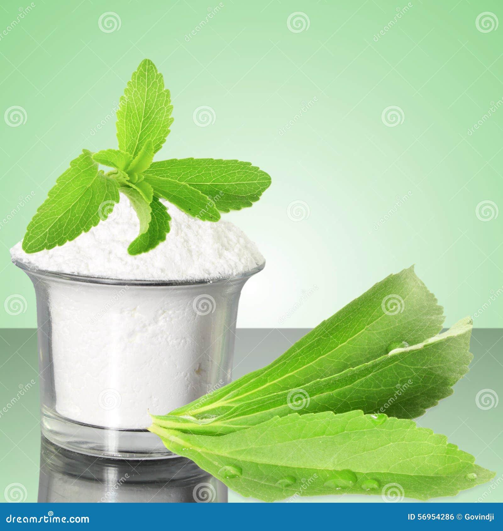 Polvo Verde Fresco Del Stevia Y Del Extracto En Fondo Verde
