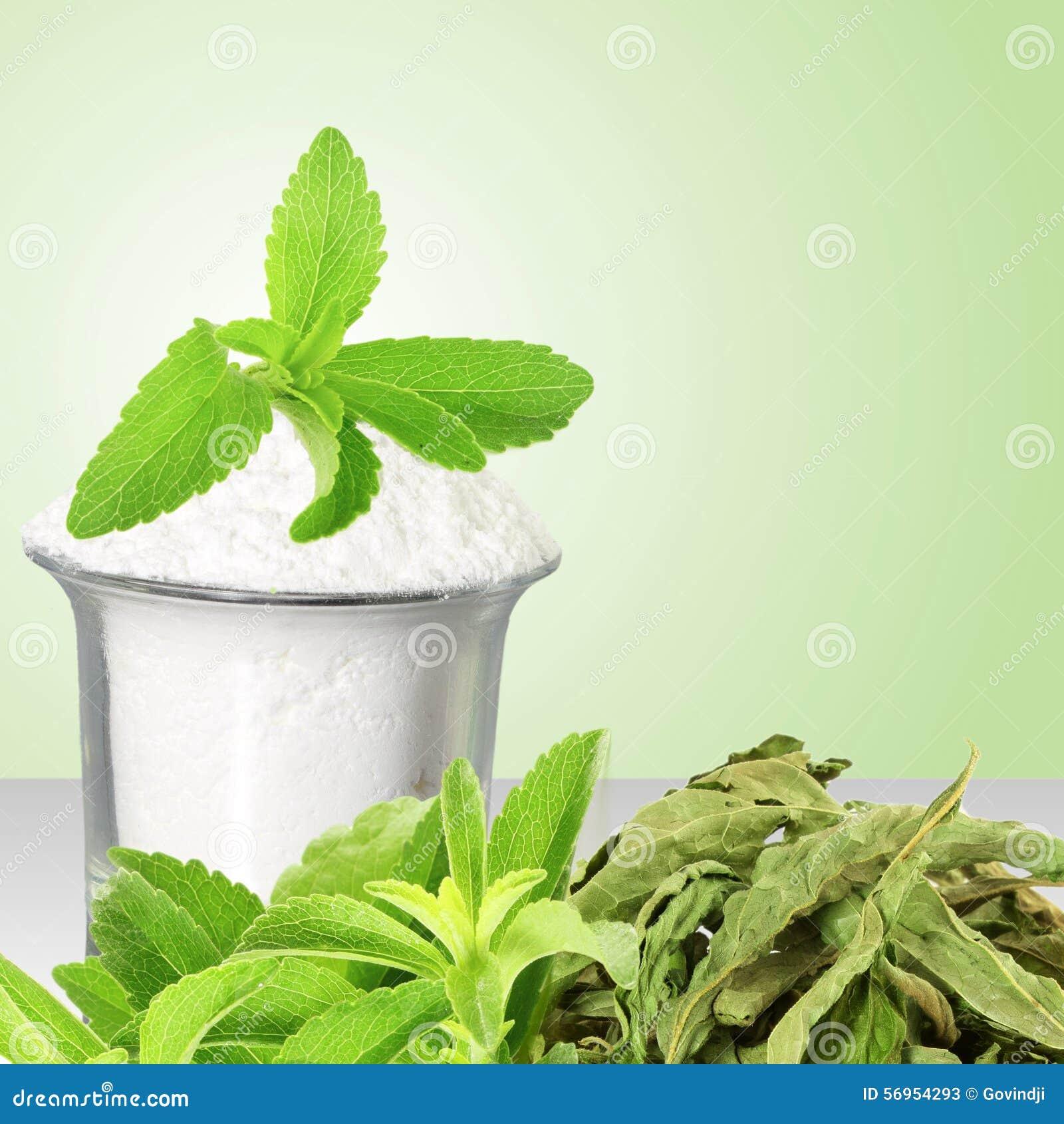 Polvo Verde Y Secado Fresco Del Stevia Y Del Extracto En