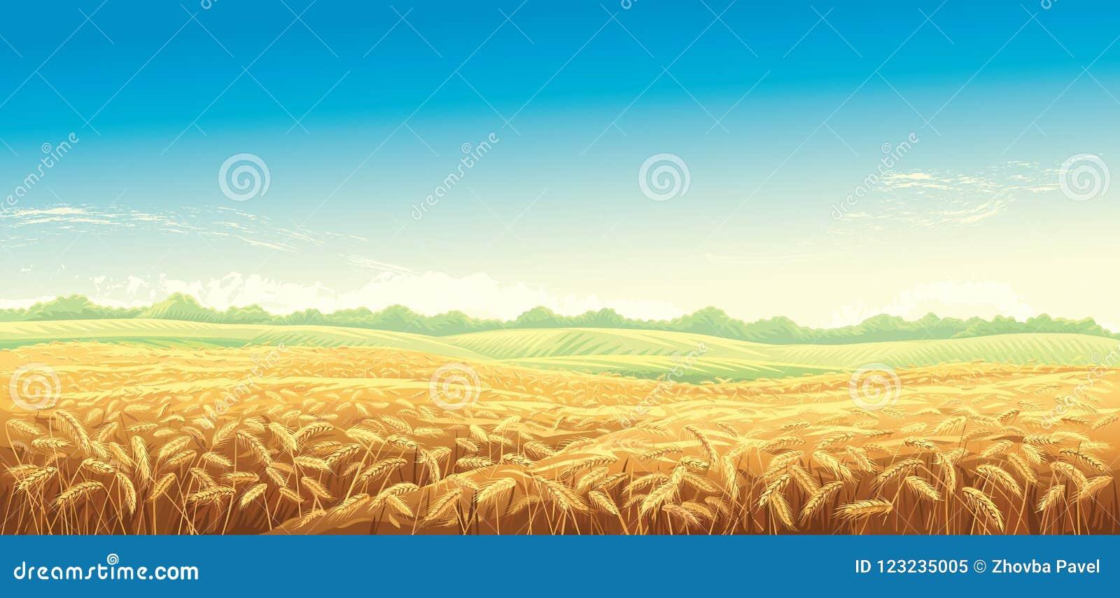 Poly ilustraci krajobrazu wiejska wektorowa banatka