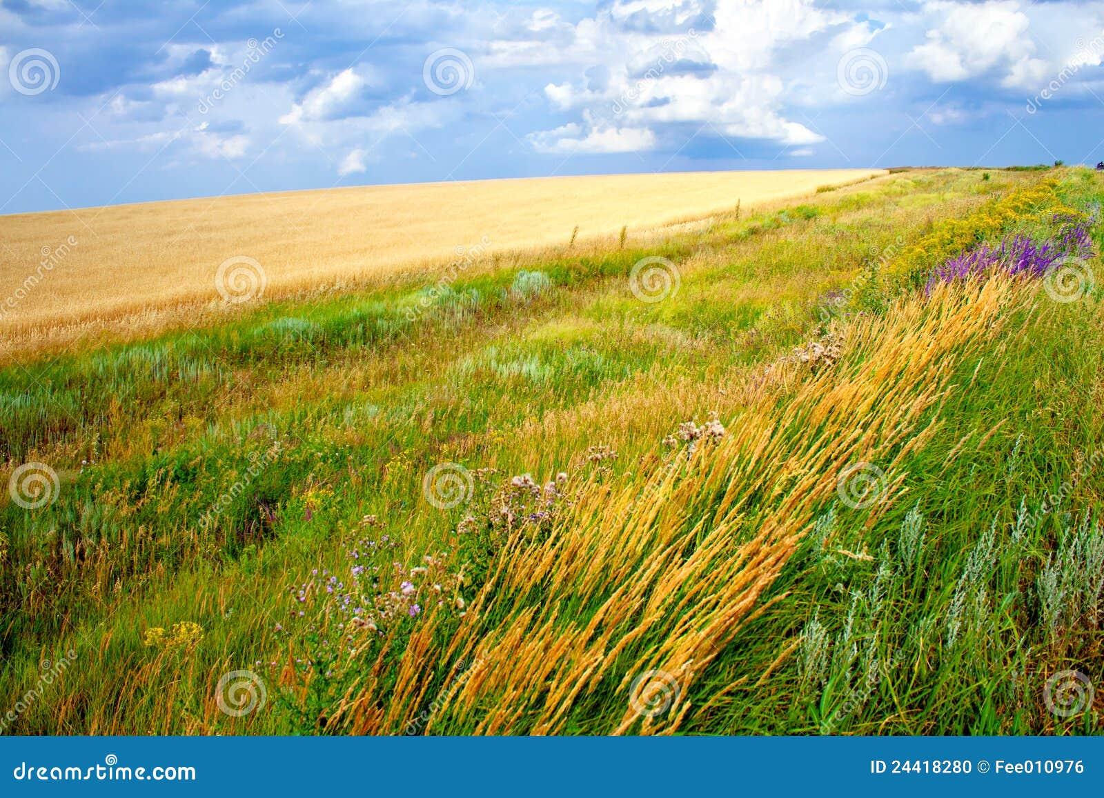 Poly trawy zieleni krajobrazu łąki