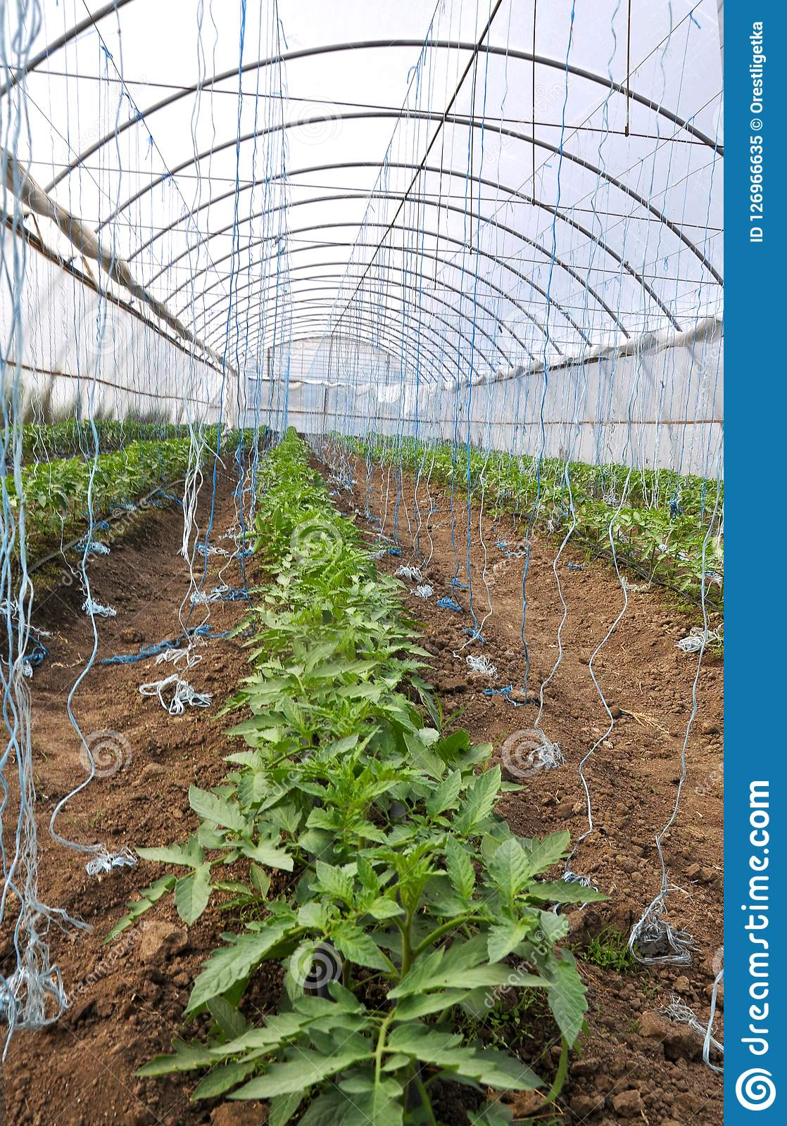 Swell Polycarbonate Greenhouse For Growing Vegetables Stock Image Download Free Architecture Designs Ogrambritishbridgeorg
