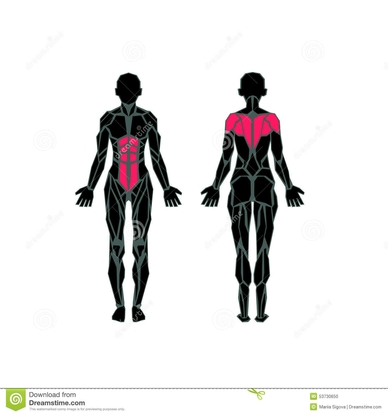 female muscular system anatomy stock photo - image: 51405110, Muscles