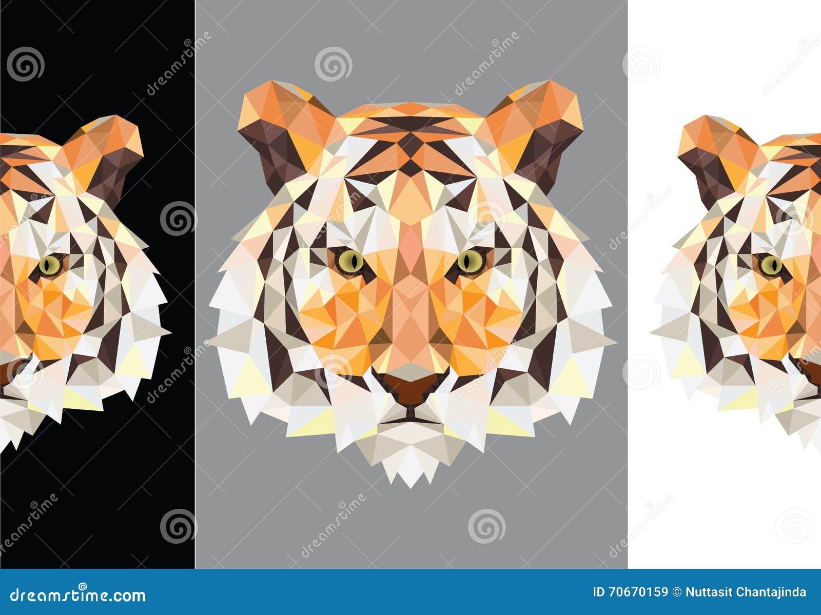 Polygone de tigre