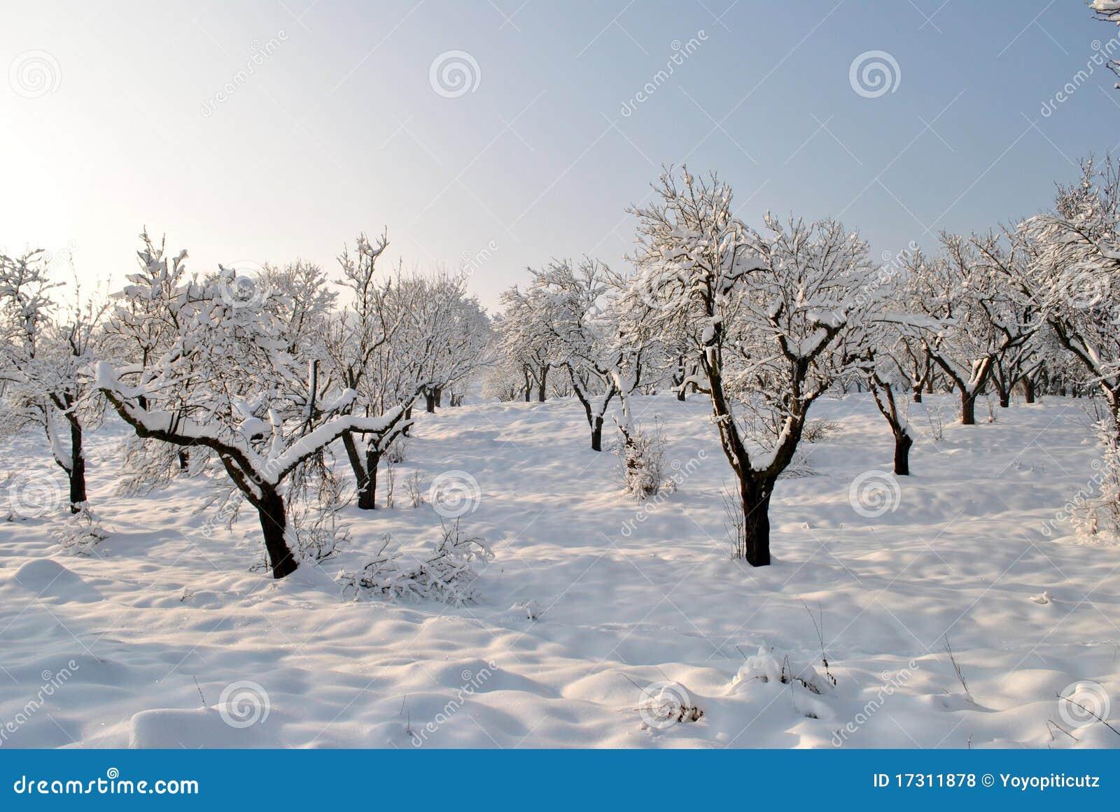Pomar no inverno