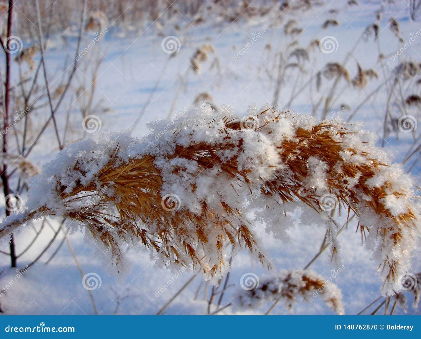 Pomarańcze opuszcza pod pierwszy śniegiem w Październiku miasto jak park Ranku mróz, wilgotność