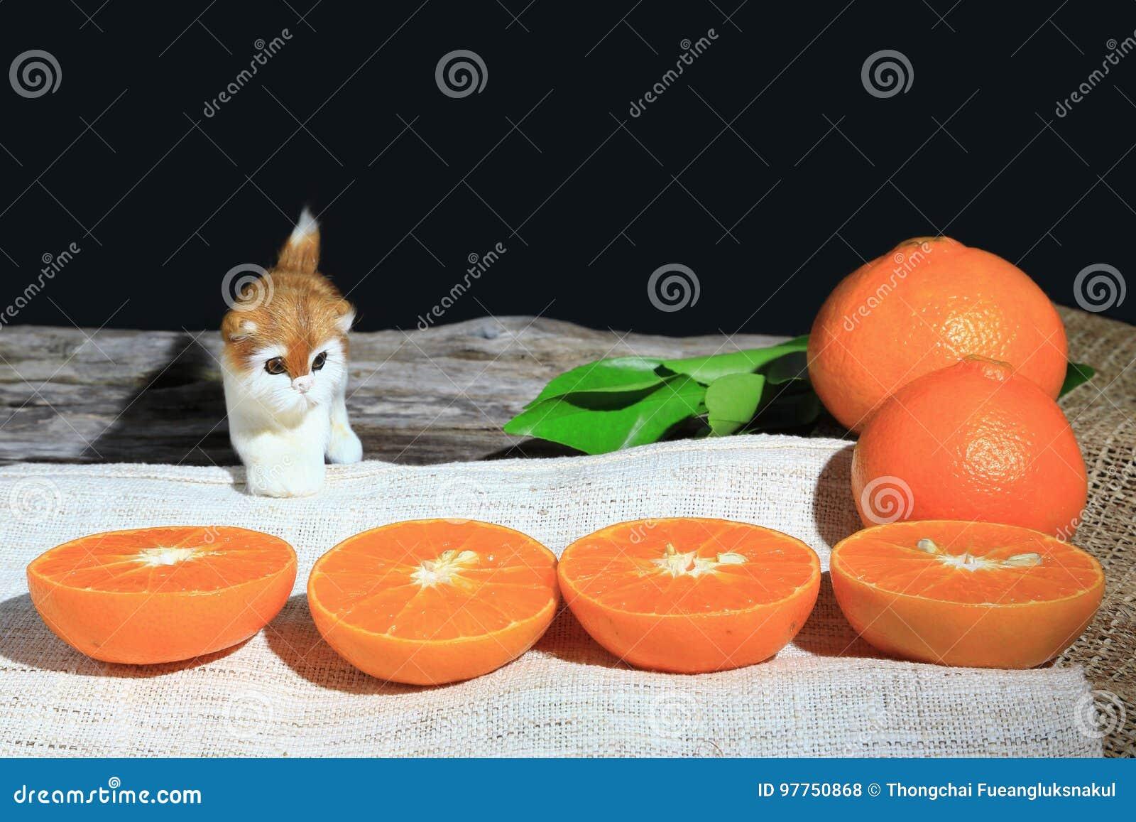 Pomarańczowe mandarynki lub tangerine owoc z zielonymi liśćmi i małym kotem na drewnianej deski tle,