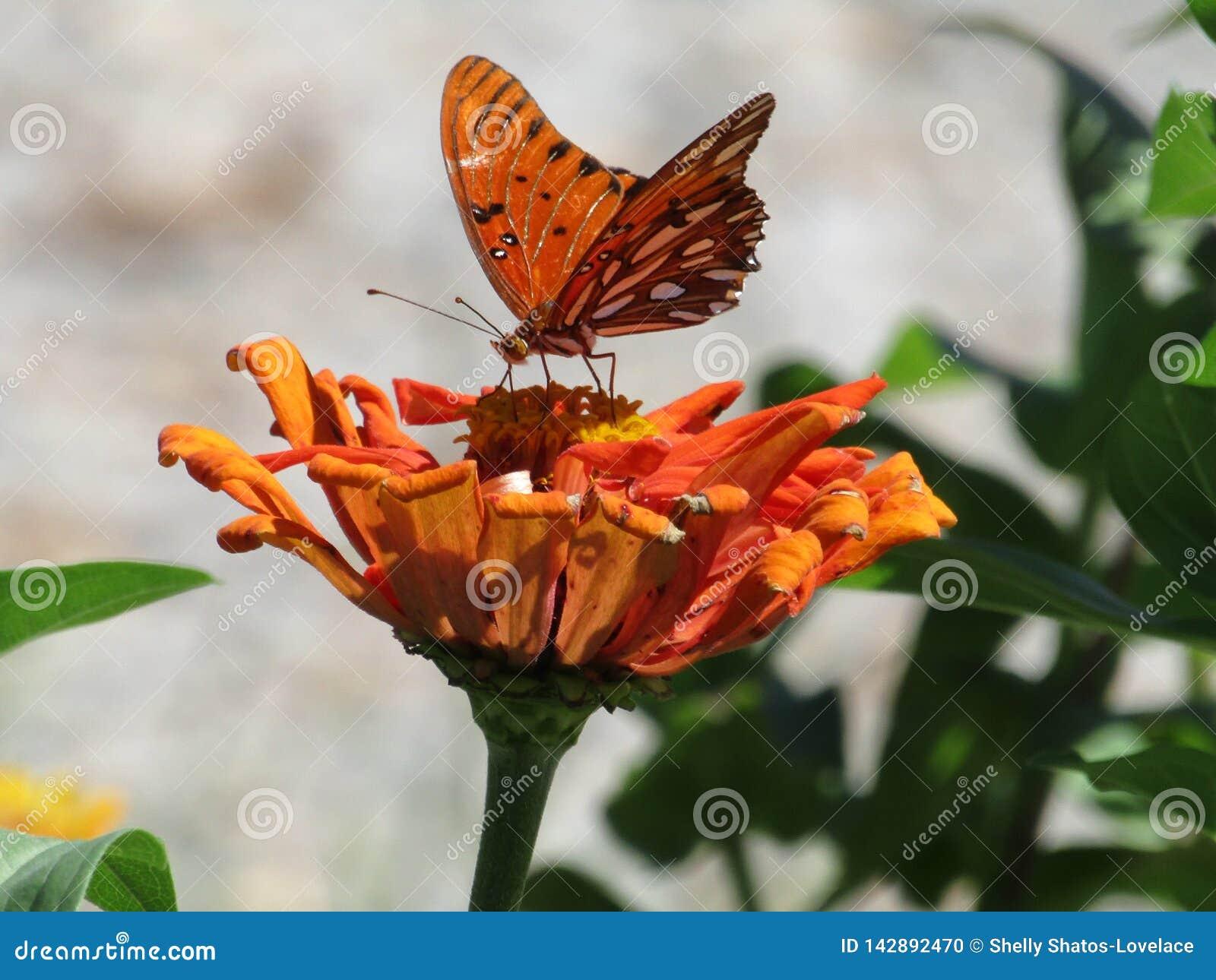 Pomara?czowy motyl