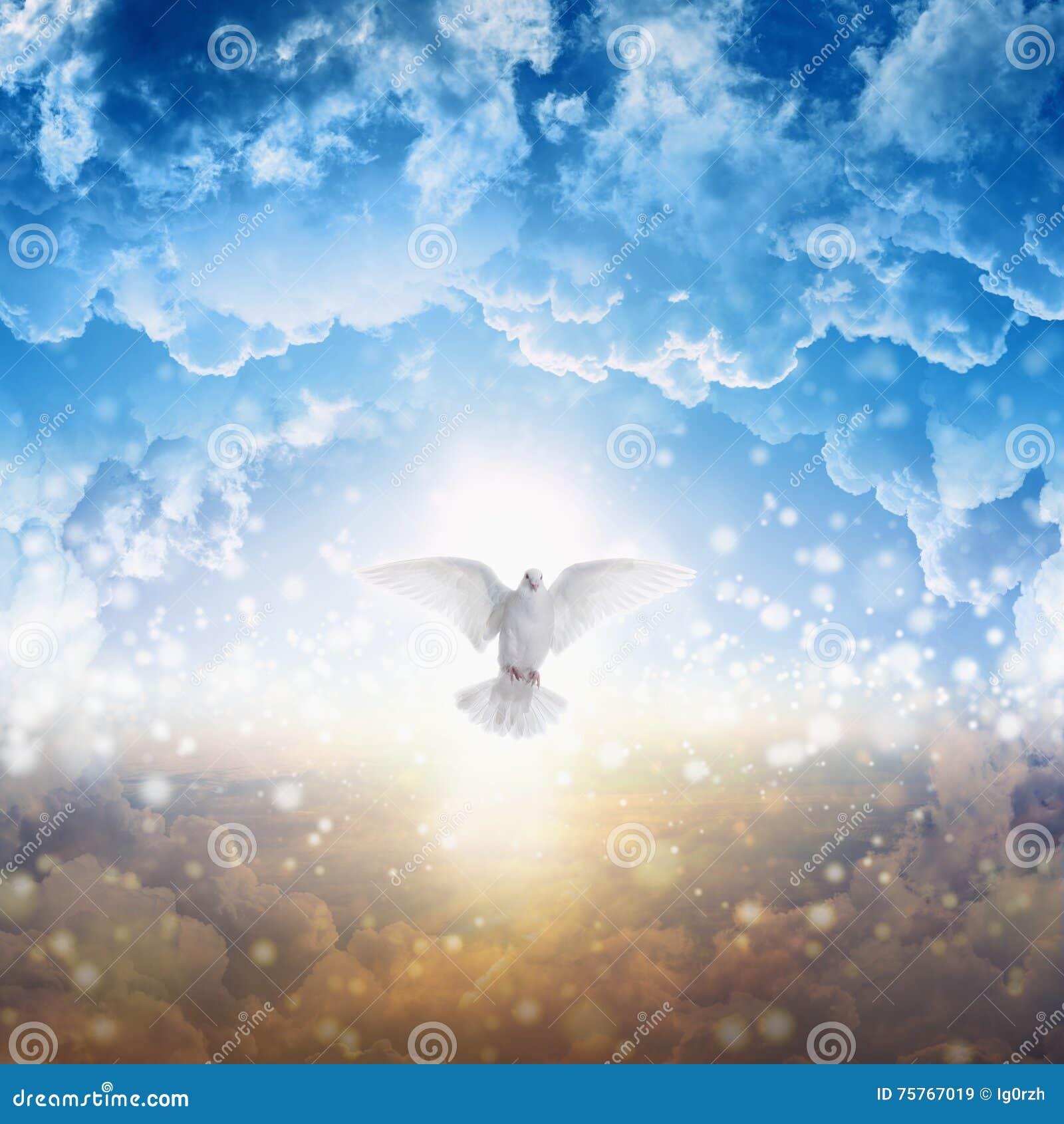 A pomba branca desce do céu