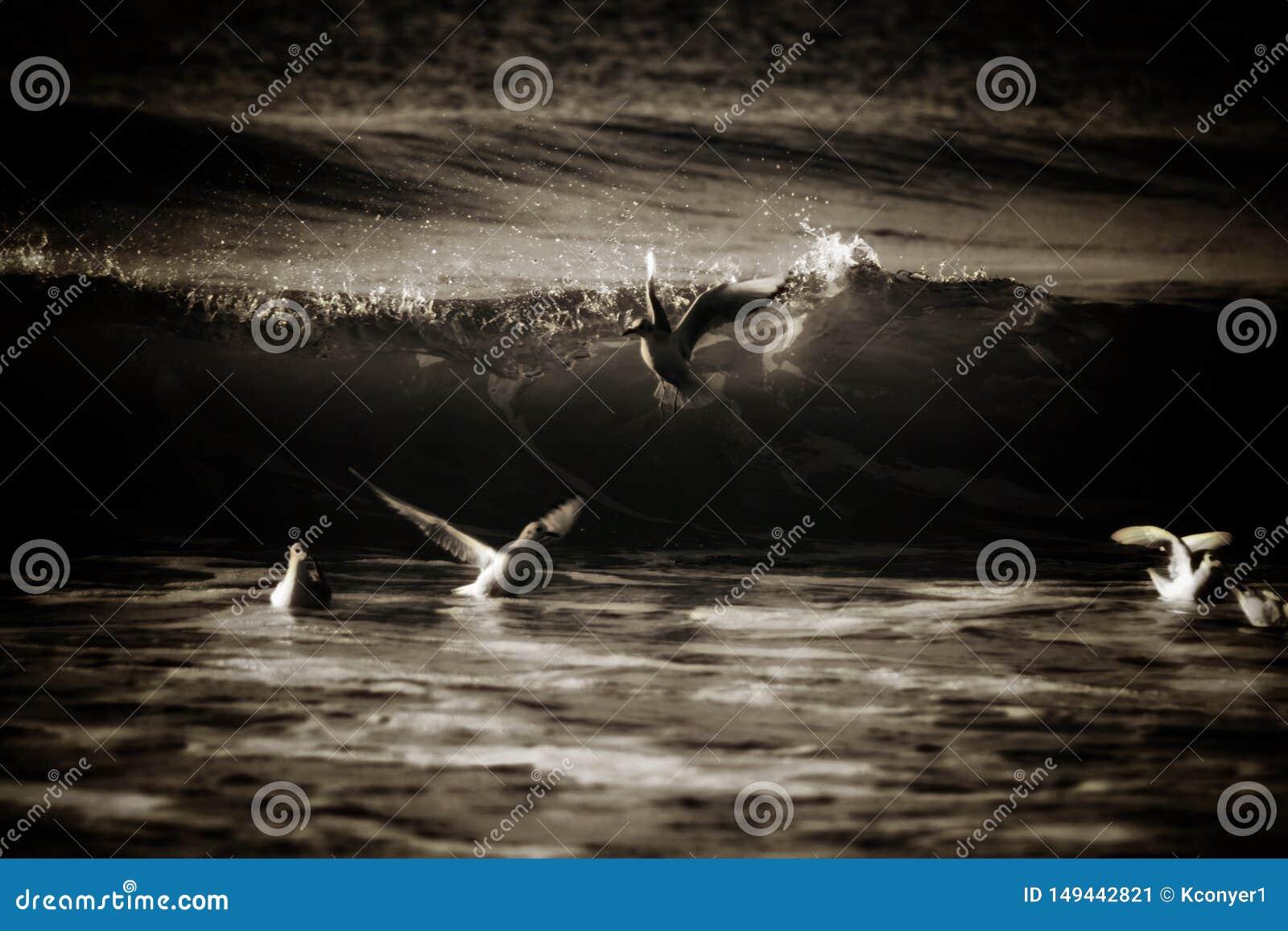 Pombas que jogam ao redor no oceano