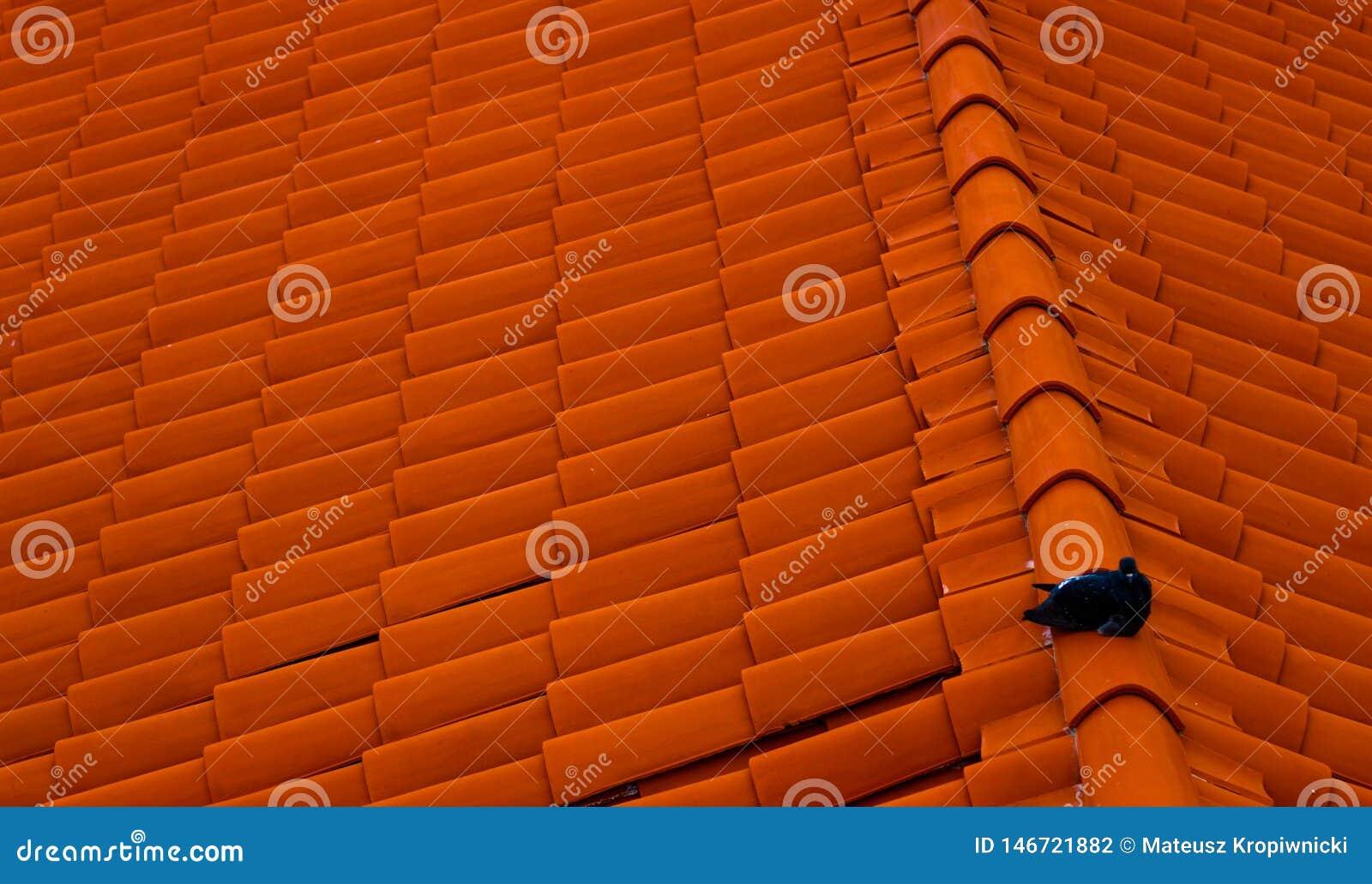 Pombo que senta-se no telhado vermelho Cidade velha em Dubrovnik