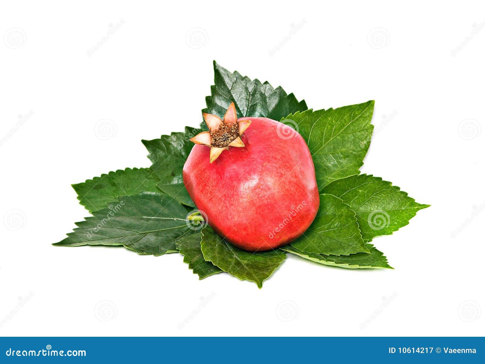 Pomegranate зрелый