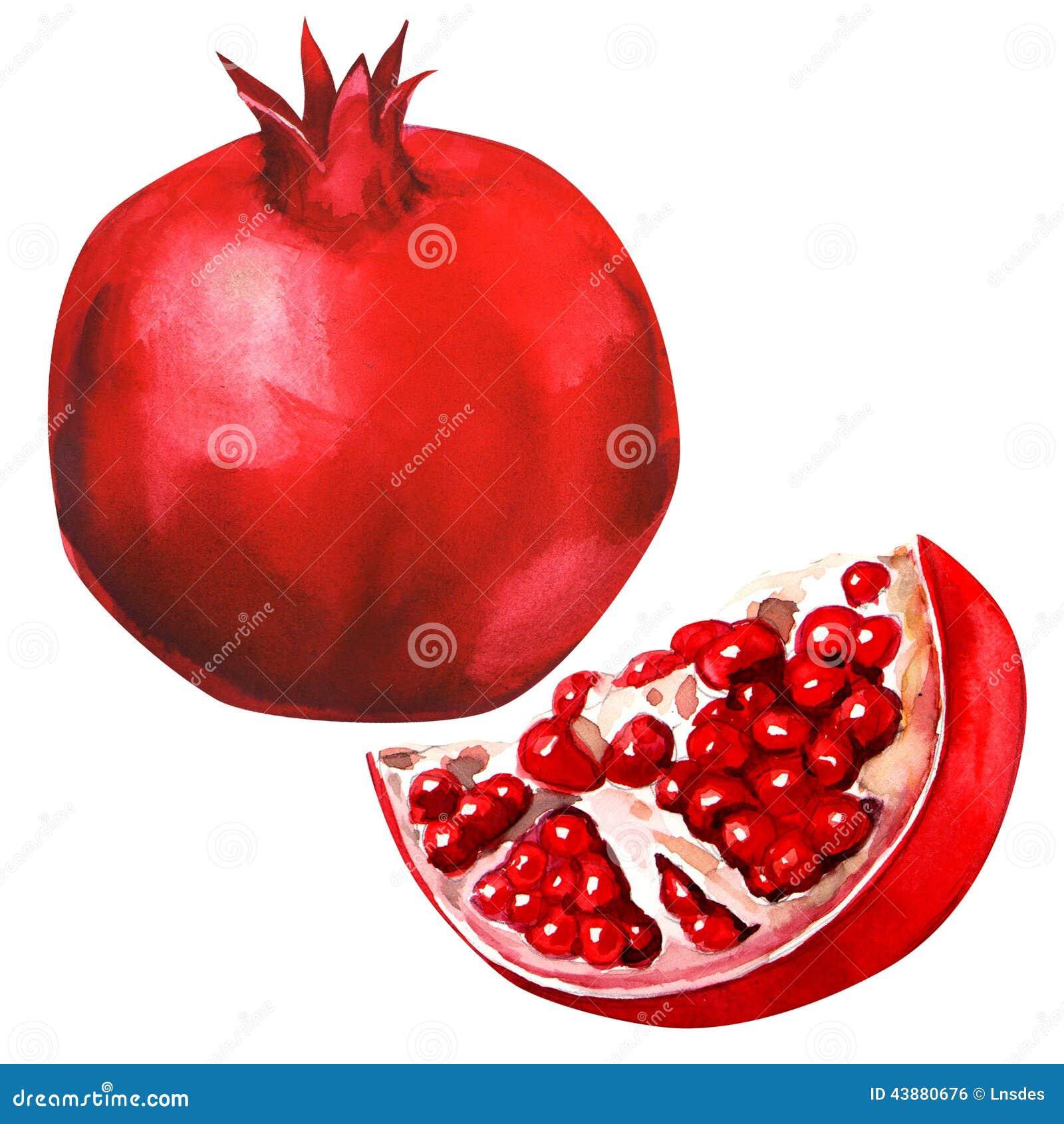 Pomegranate fruit isolated stock illustration illustration of piece 43880676 - Grenade fruit dessin ...