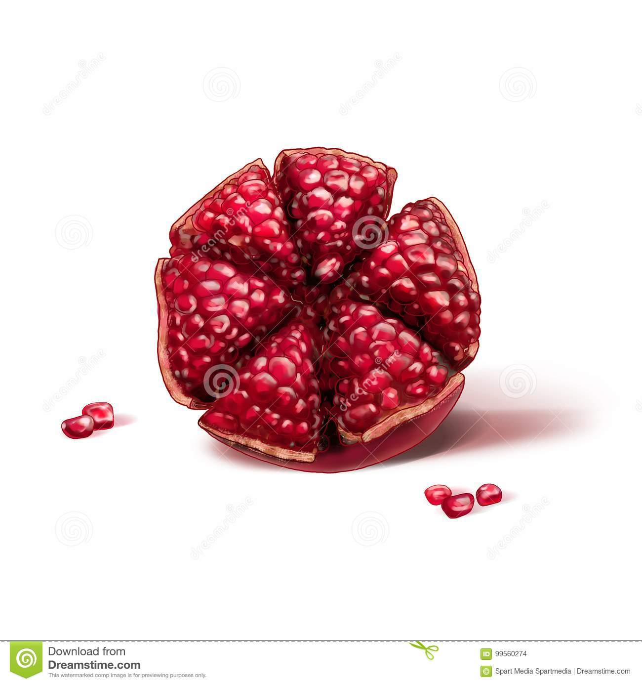 Pomegranate Seeds Watercolor Stock Photo - Image of frame