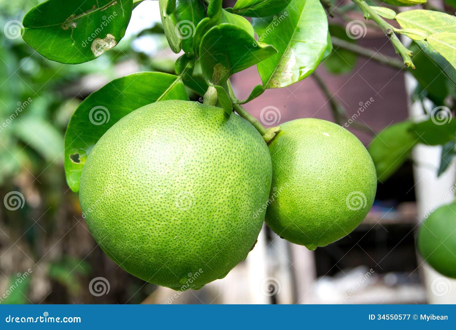 Pomelo fruit stock image. Image of freshness, heap, group ...